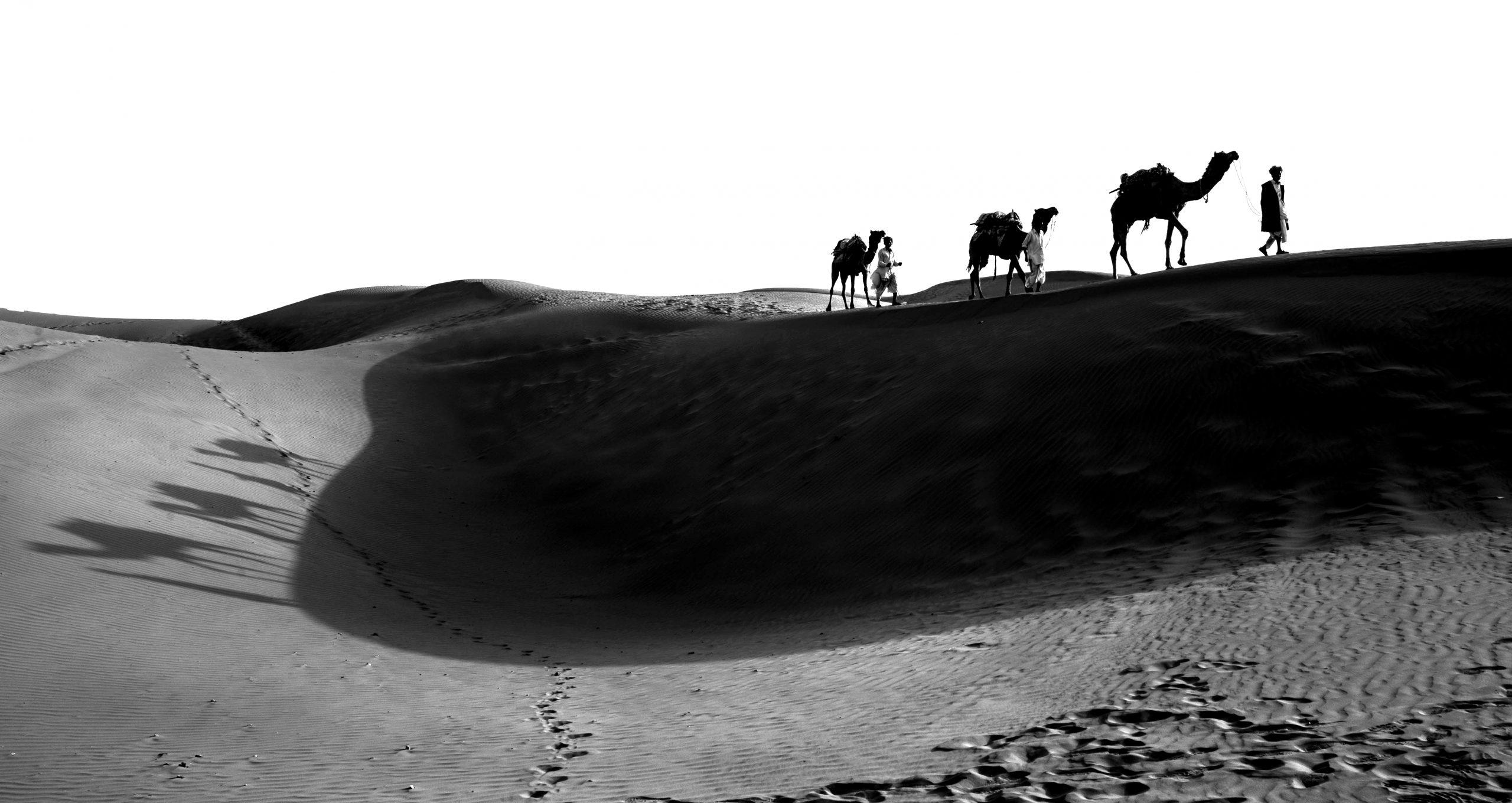 Arabian Camel in the Desert on Black and White