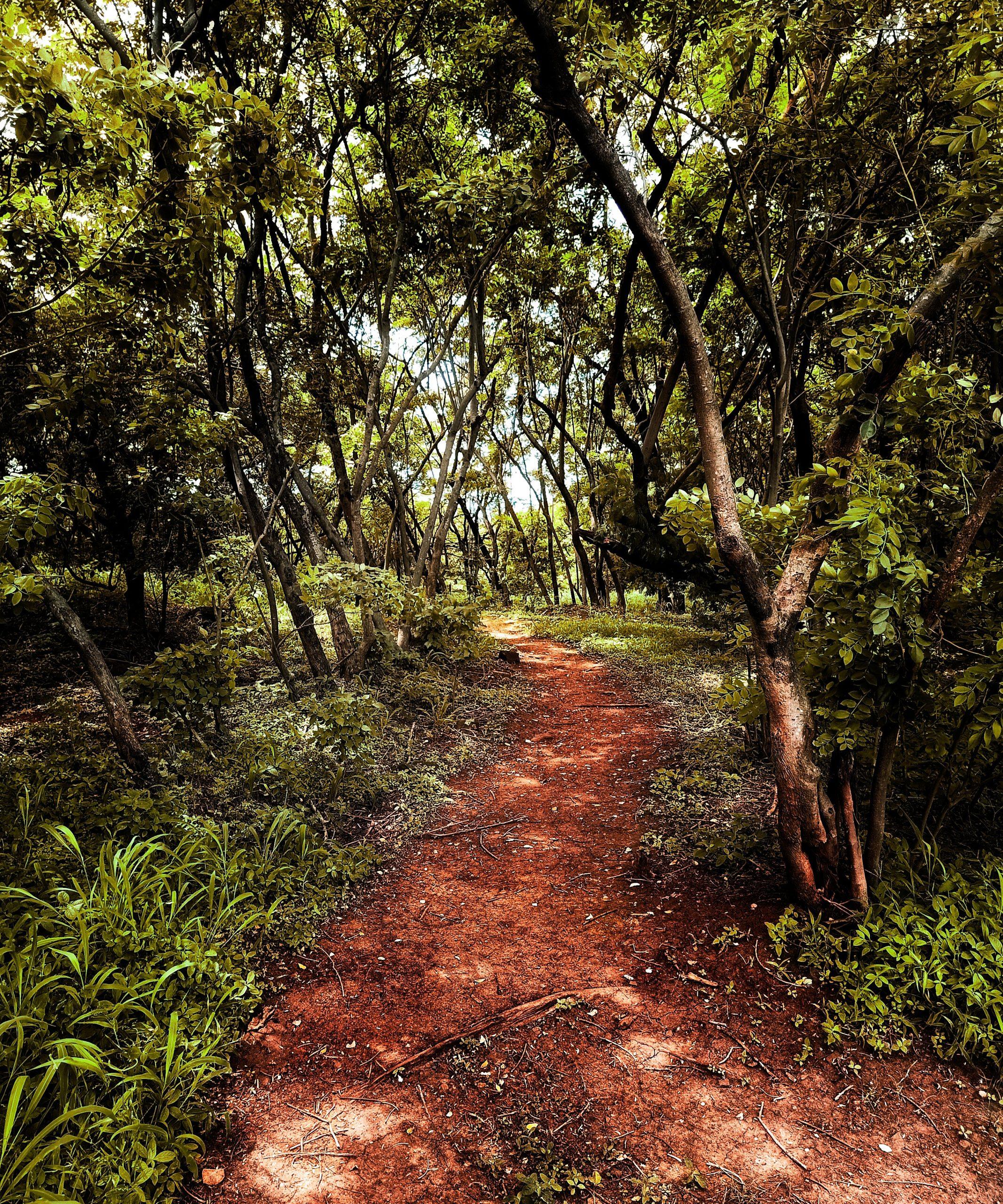 Arai Hills in Pune Forest Trail
