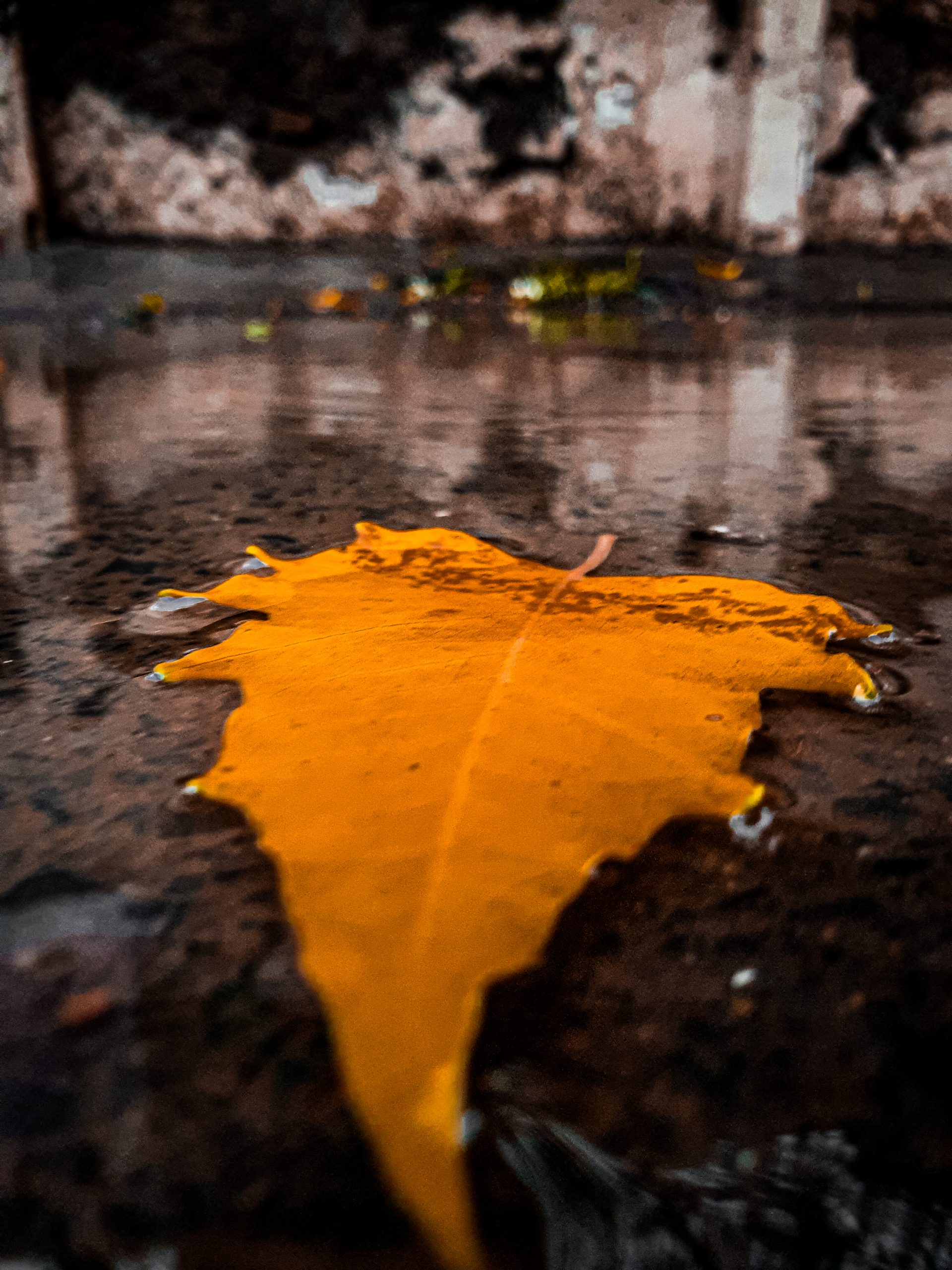 Dried leaf soaked in water