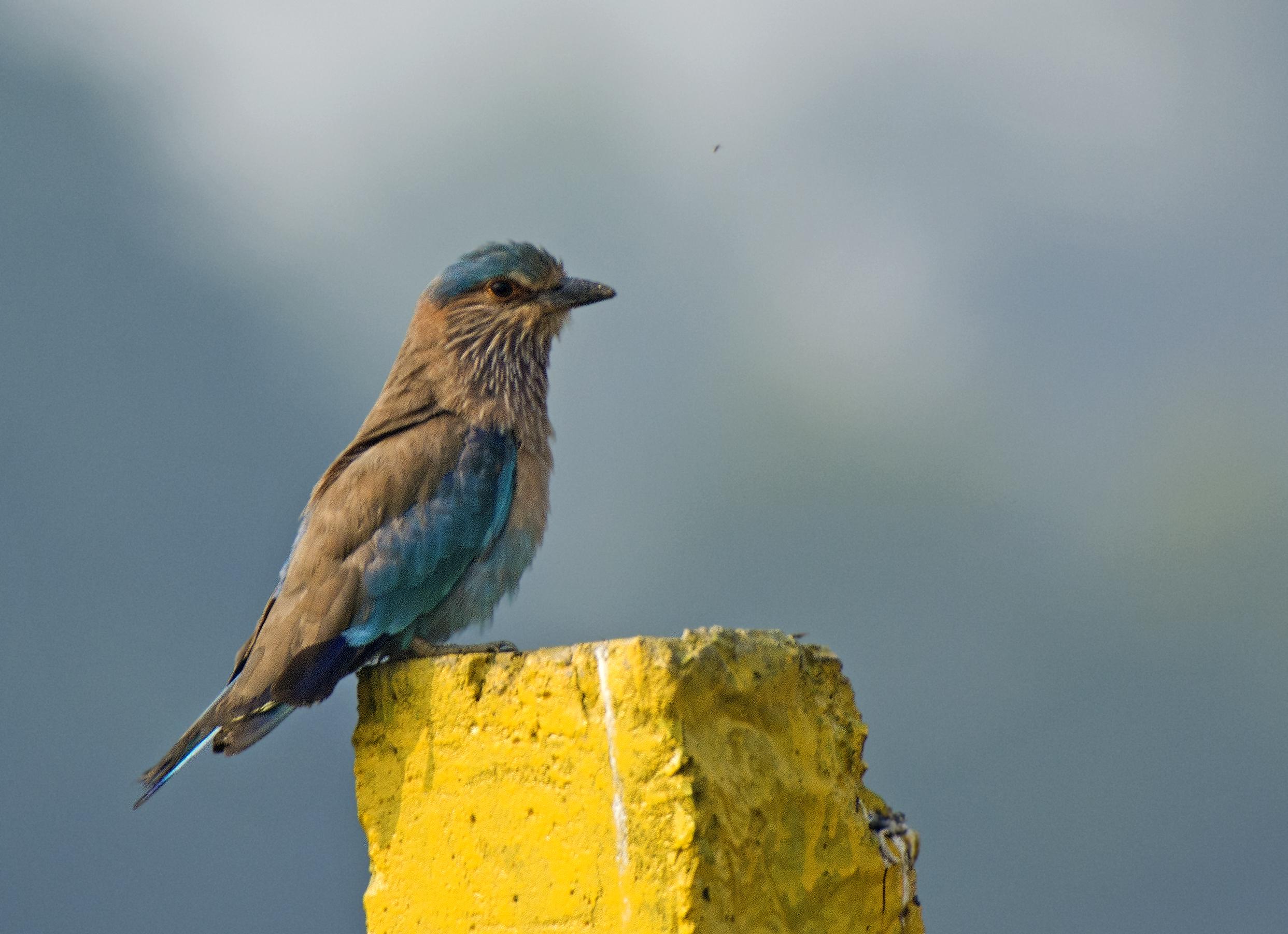 Sitting Bird