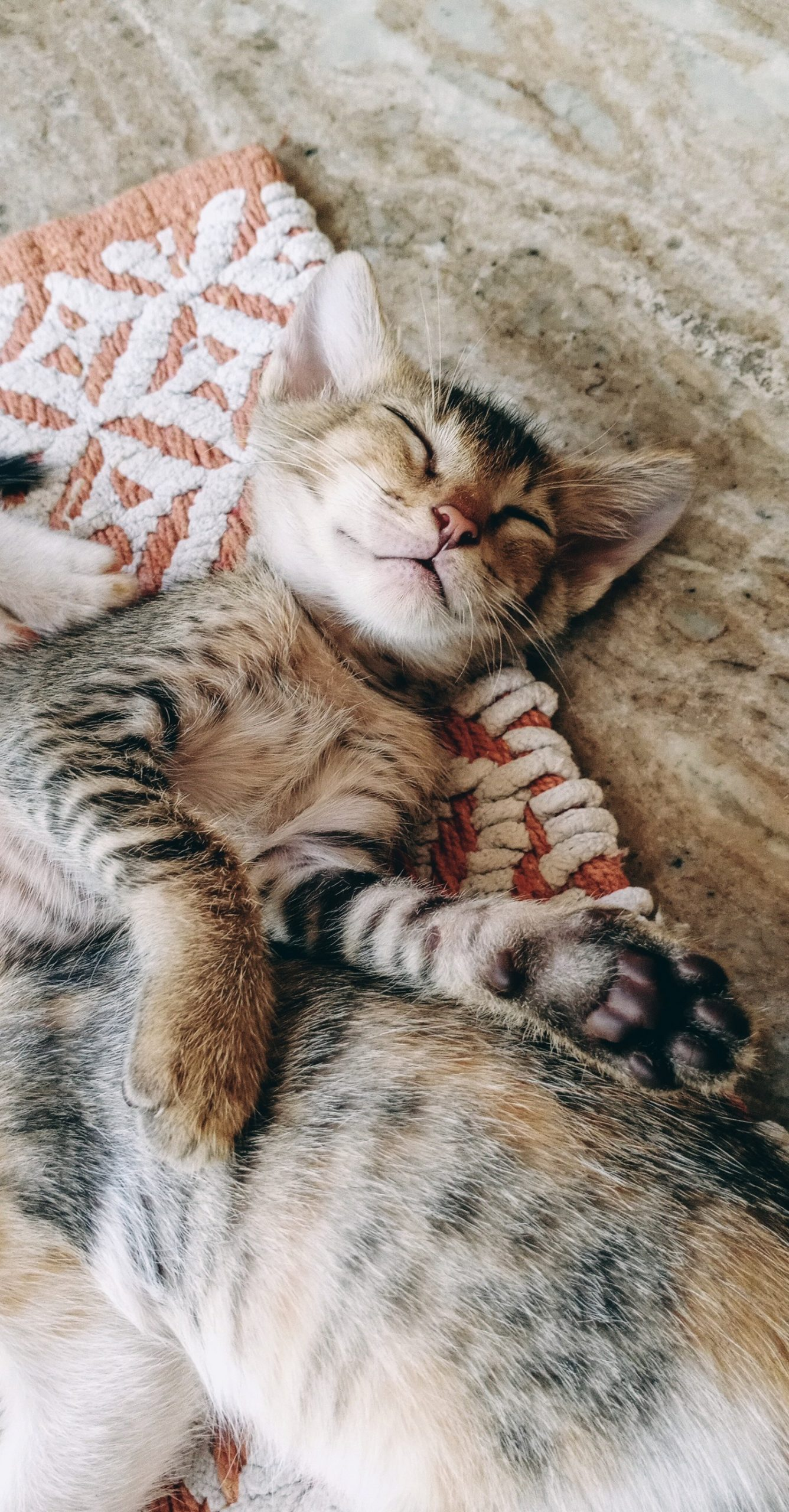 Baby Tabby Cat Sleeping
