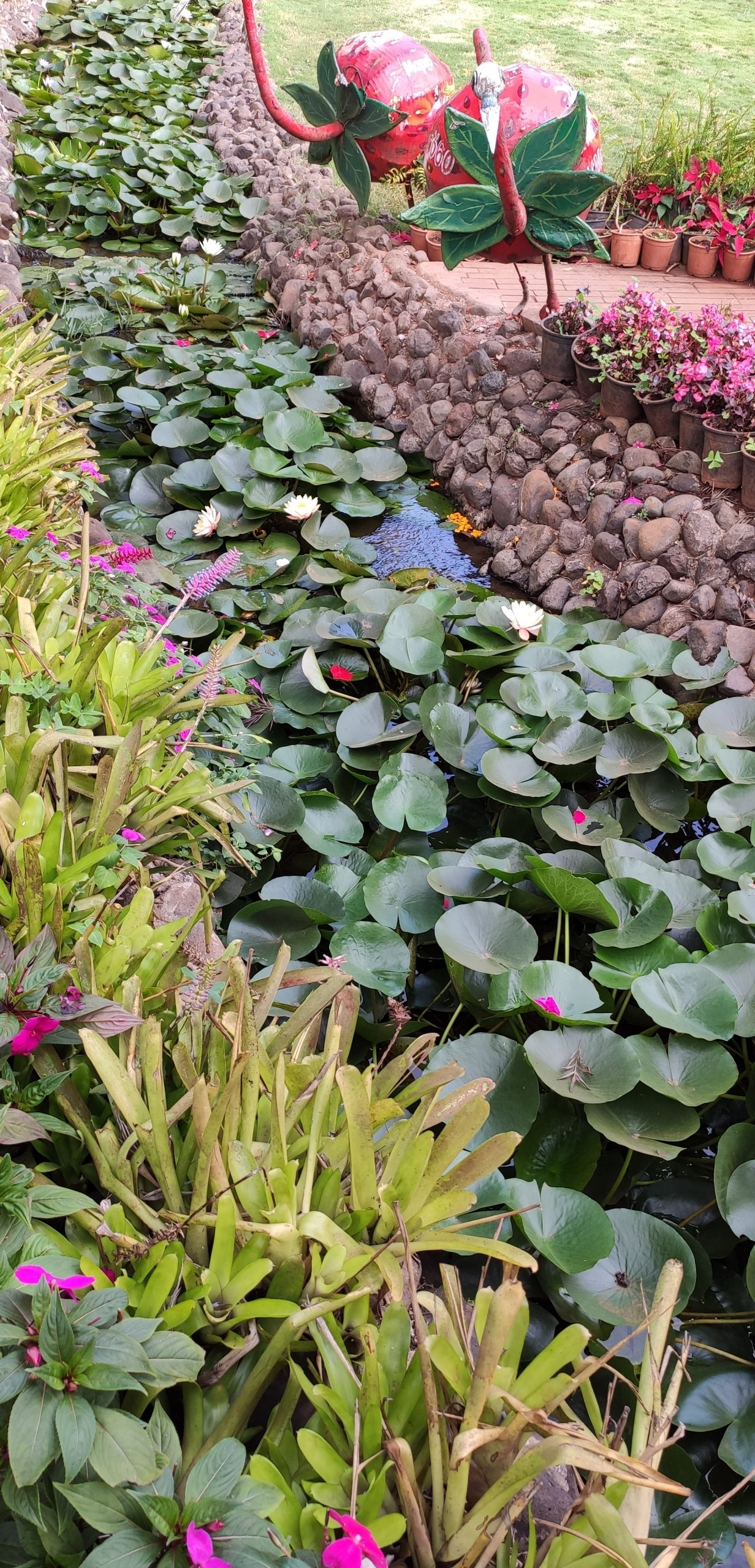 different types of plants in a garden