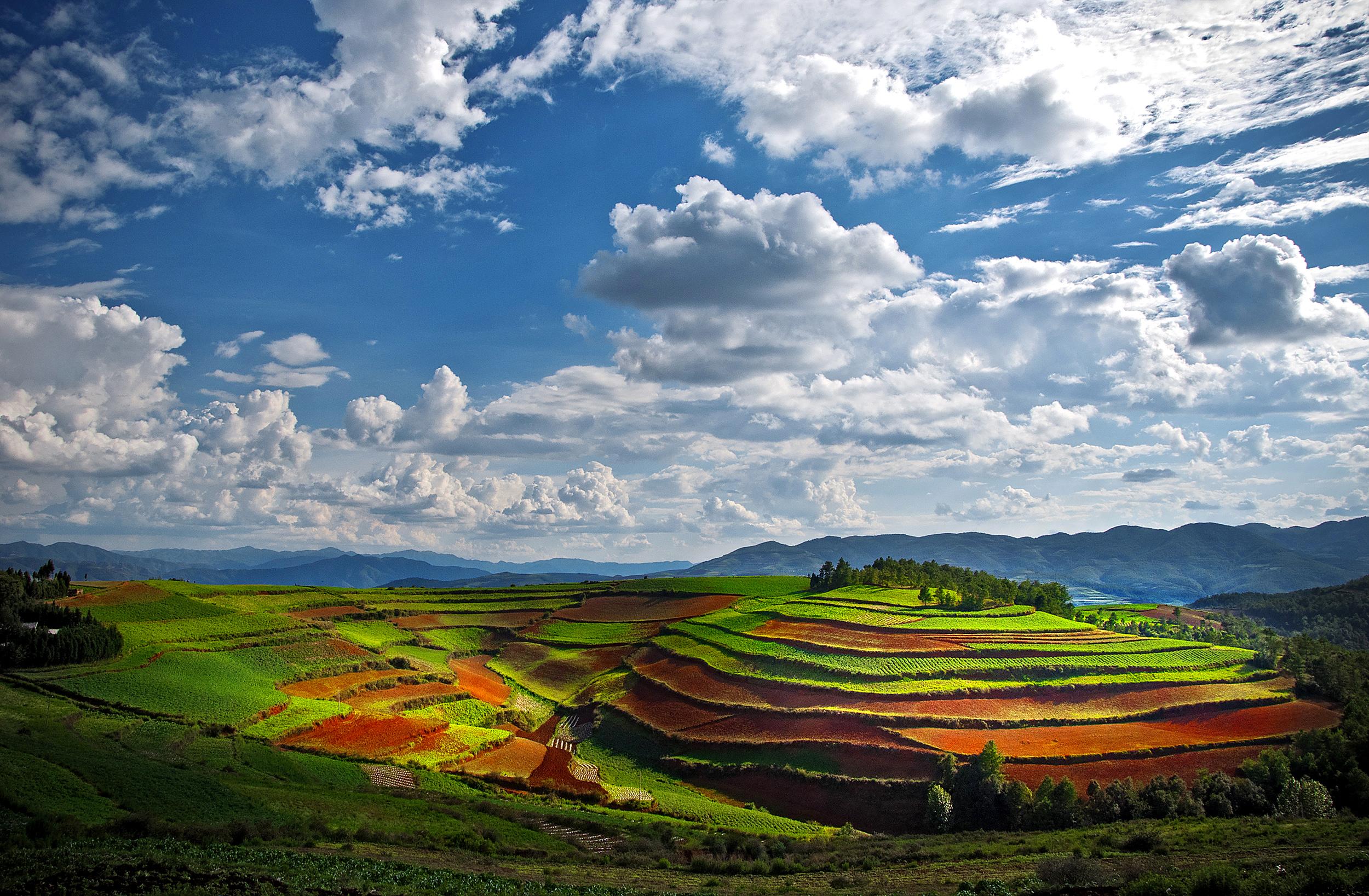 Beauty of farmland