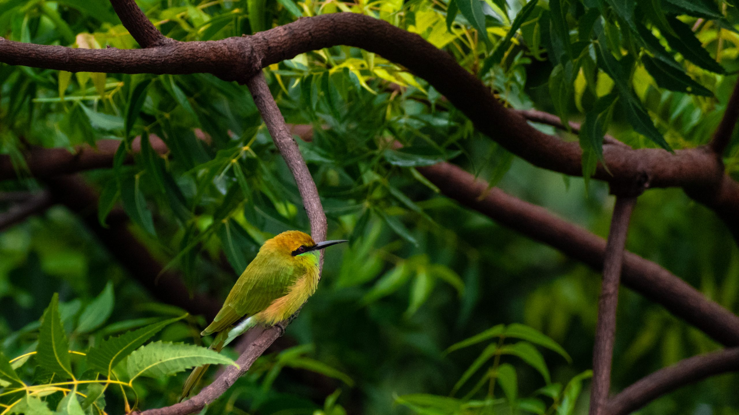 Bee-eater perched on a tree