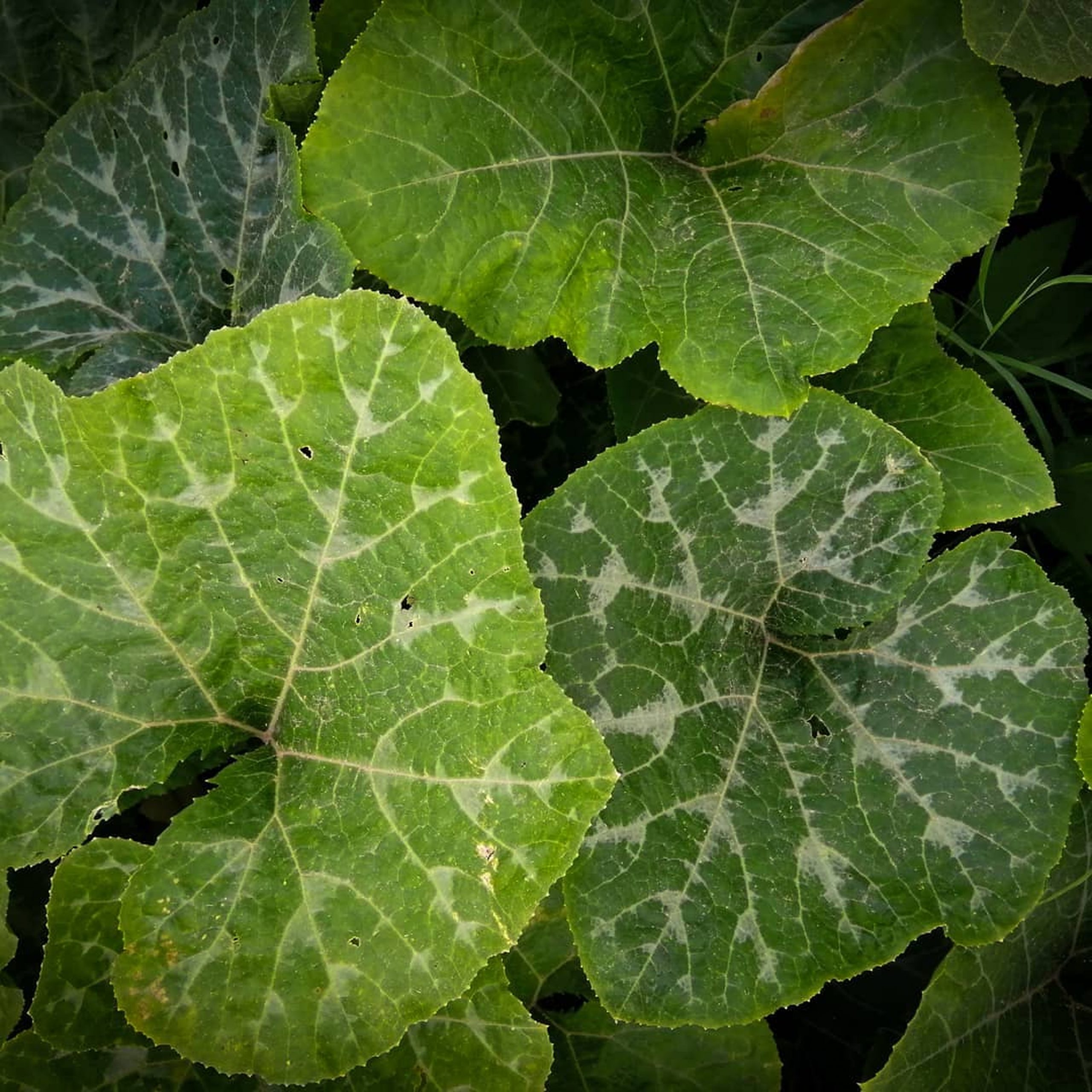 Big Plant Leaves on Focus