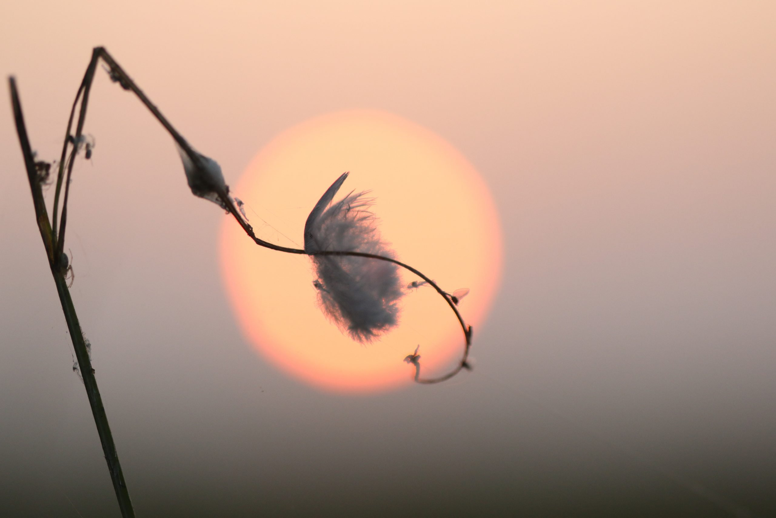 Solar eclipse by a feather.