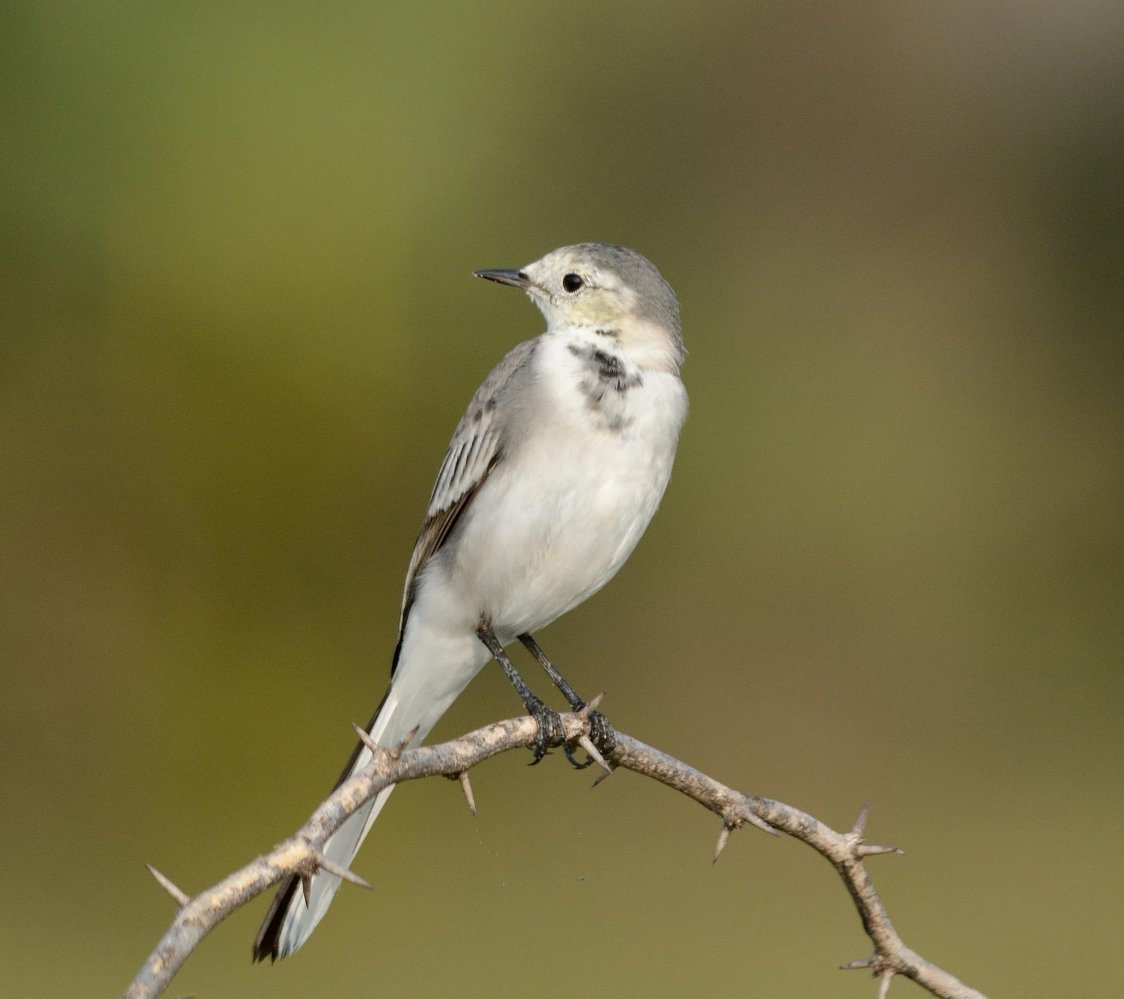 Bird in Branch of Tree on Focus