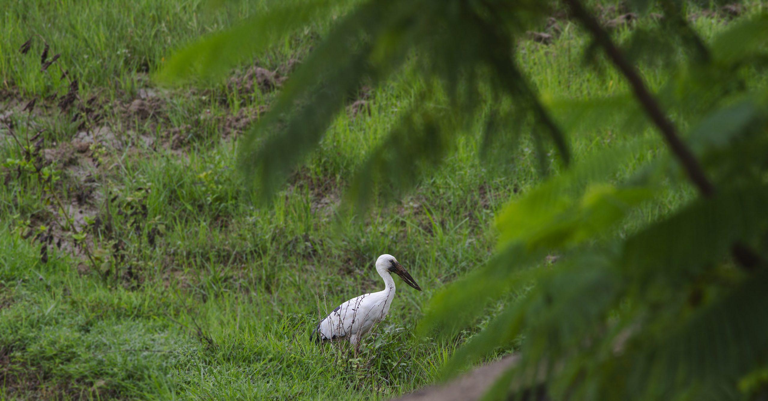 Bird in the Crop Field