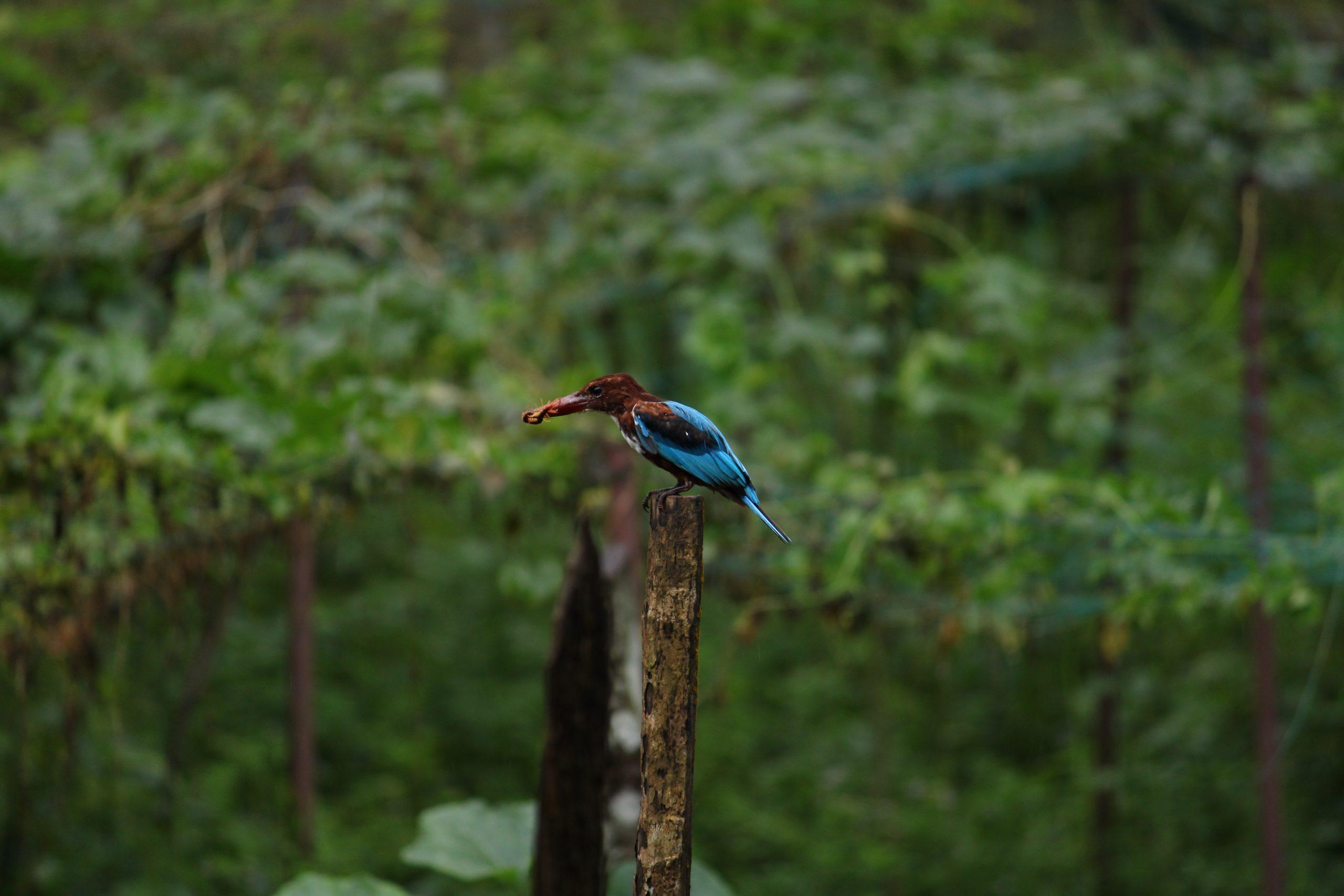 Bird sitting on a Stick on Focus
