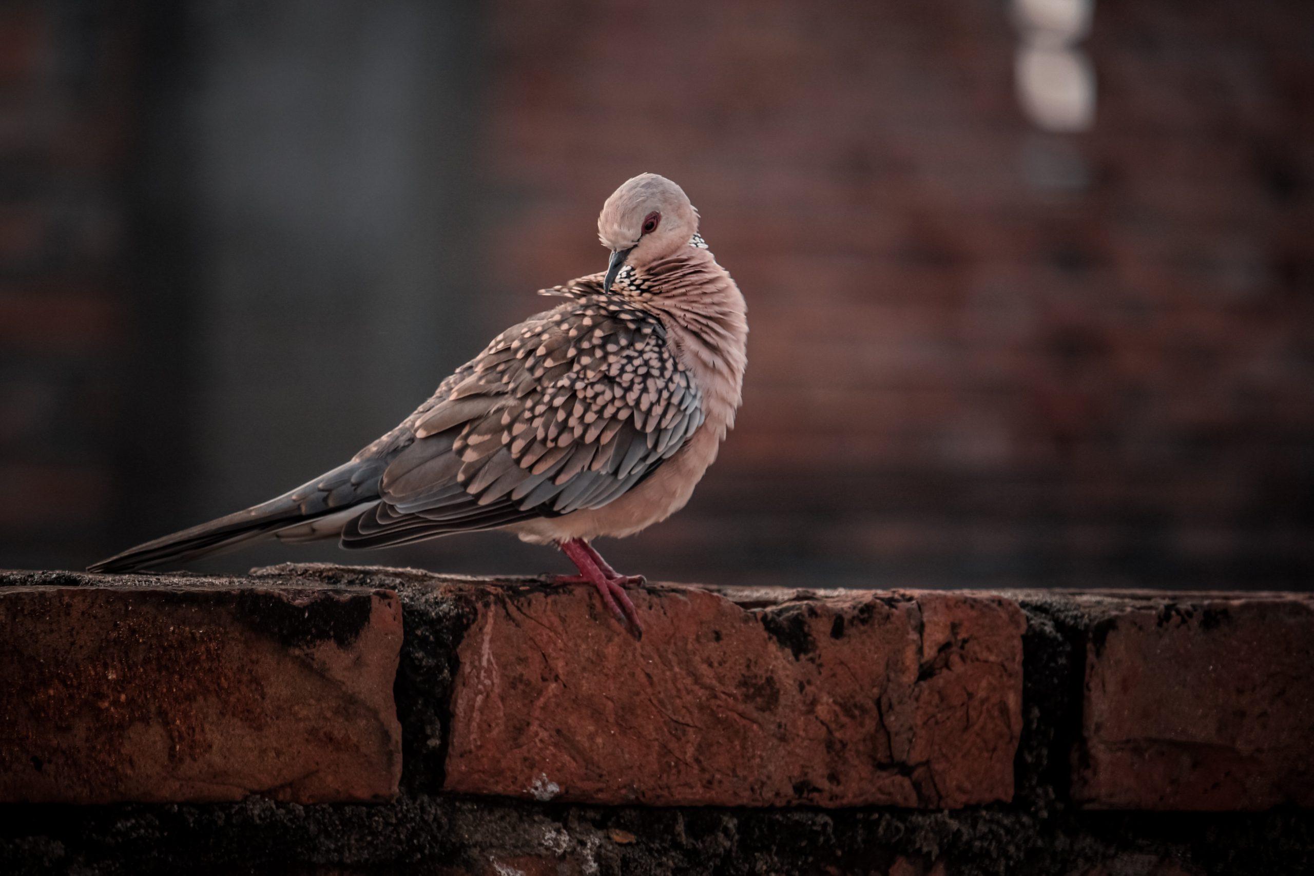 Bird sitting on a brick