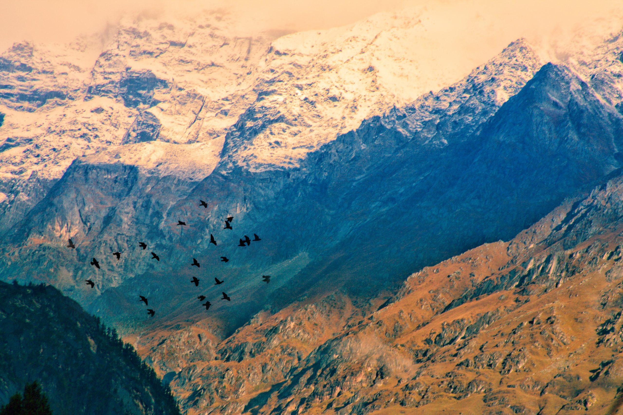 Birds flying around mountains