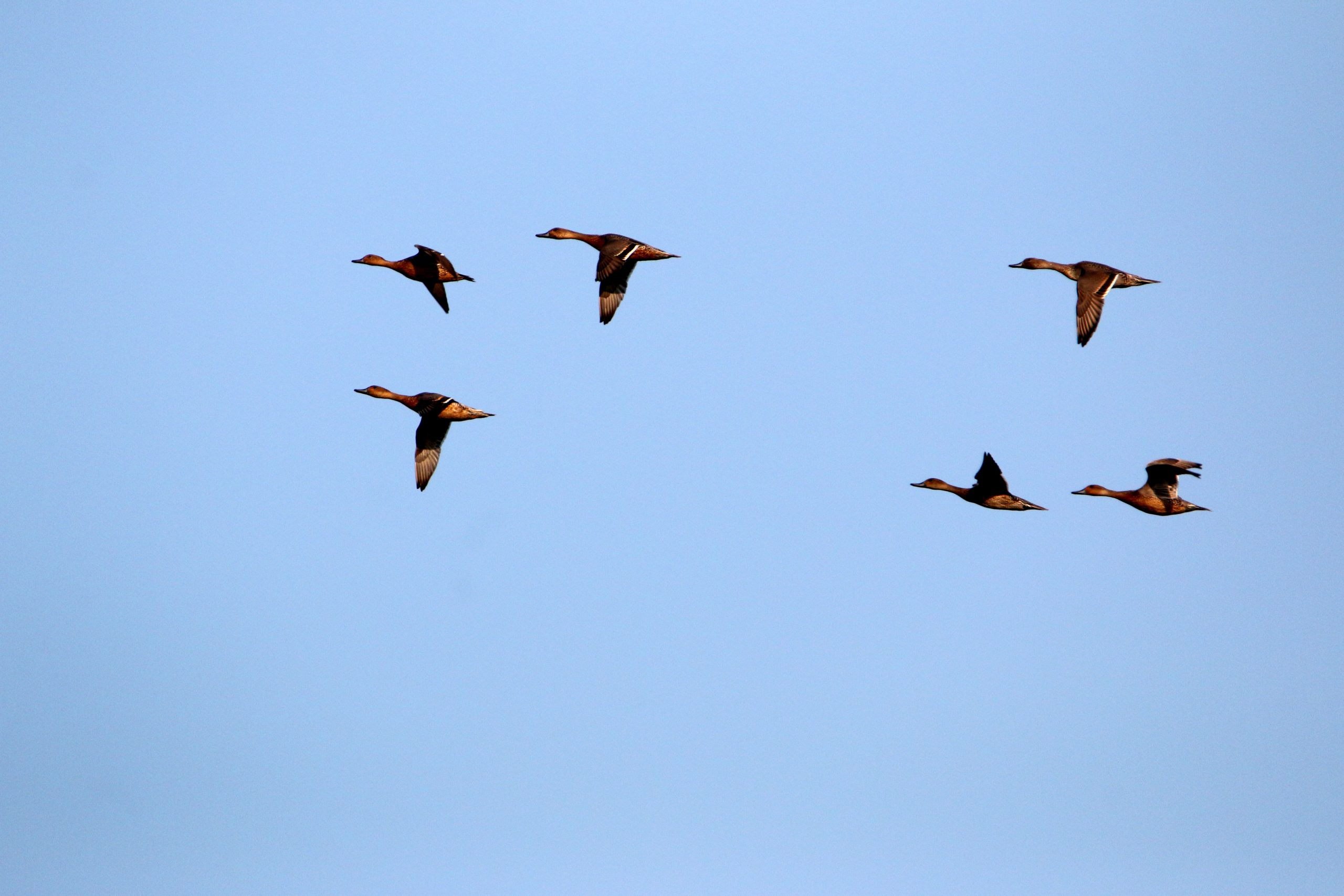 Birds migrating.