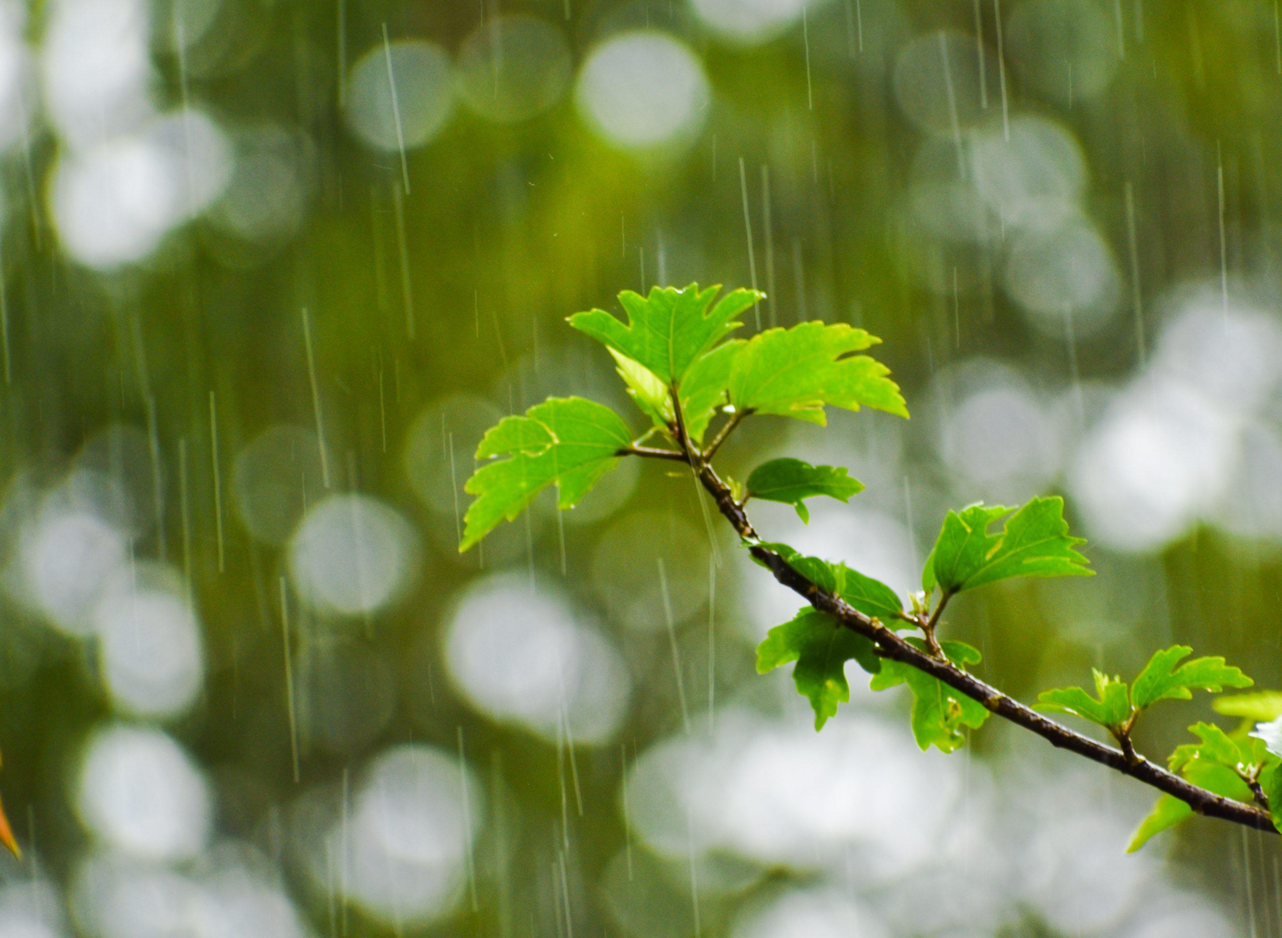 Bokeh shot of rain falling on a tree branch