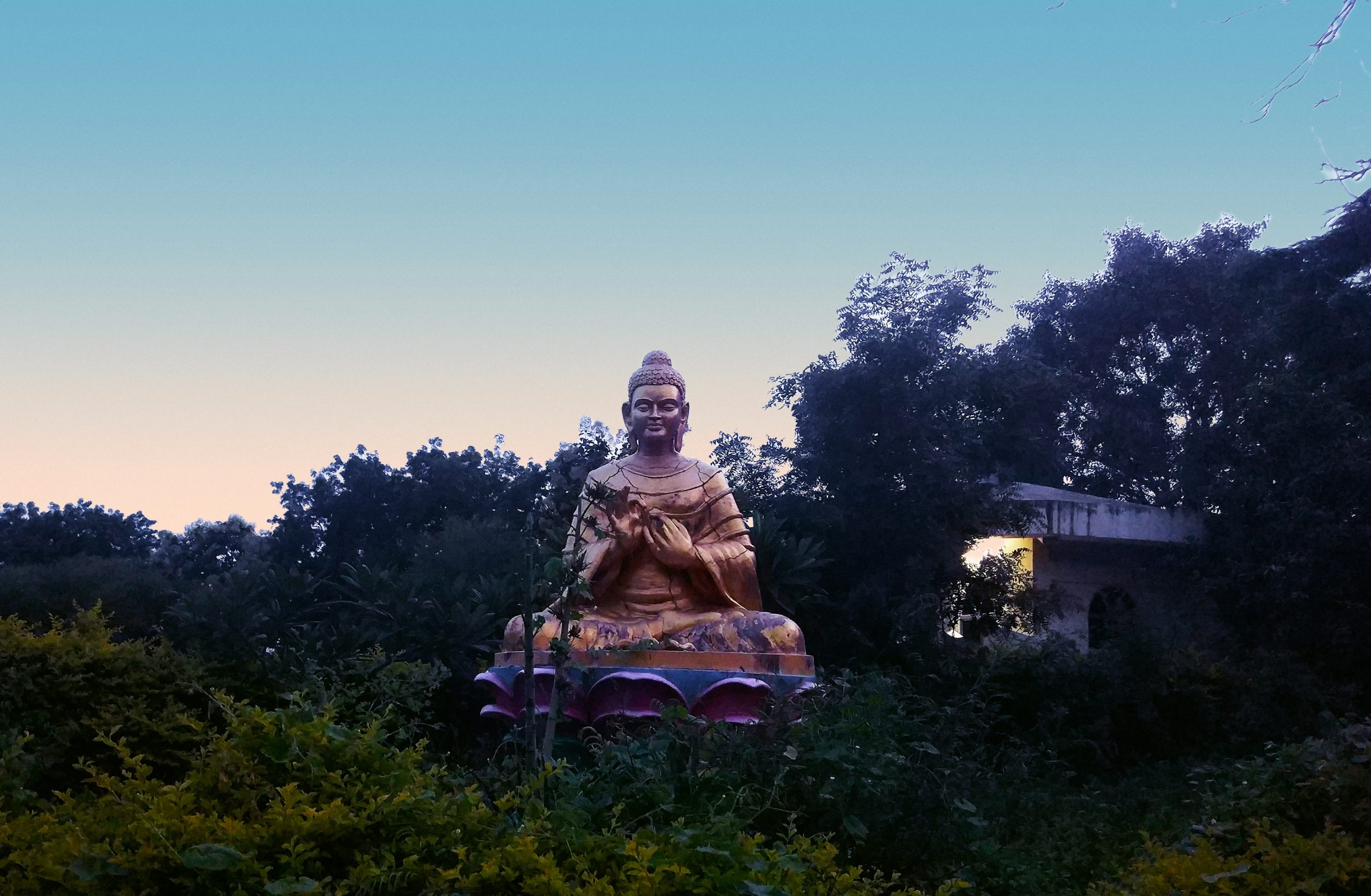 Buddha Surrounded by Trees