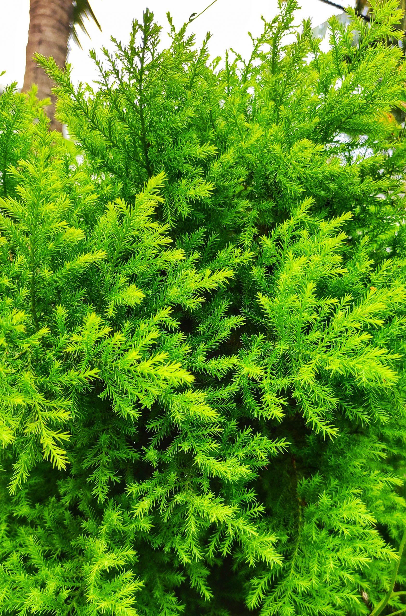 Bunch of Greenery Grass