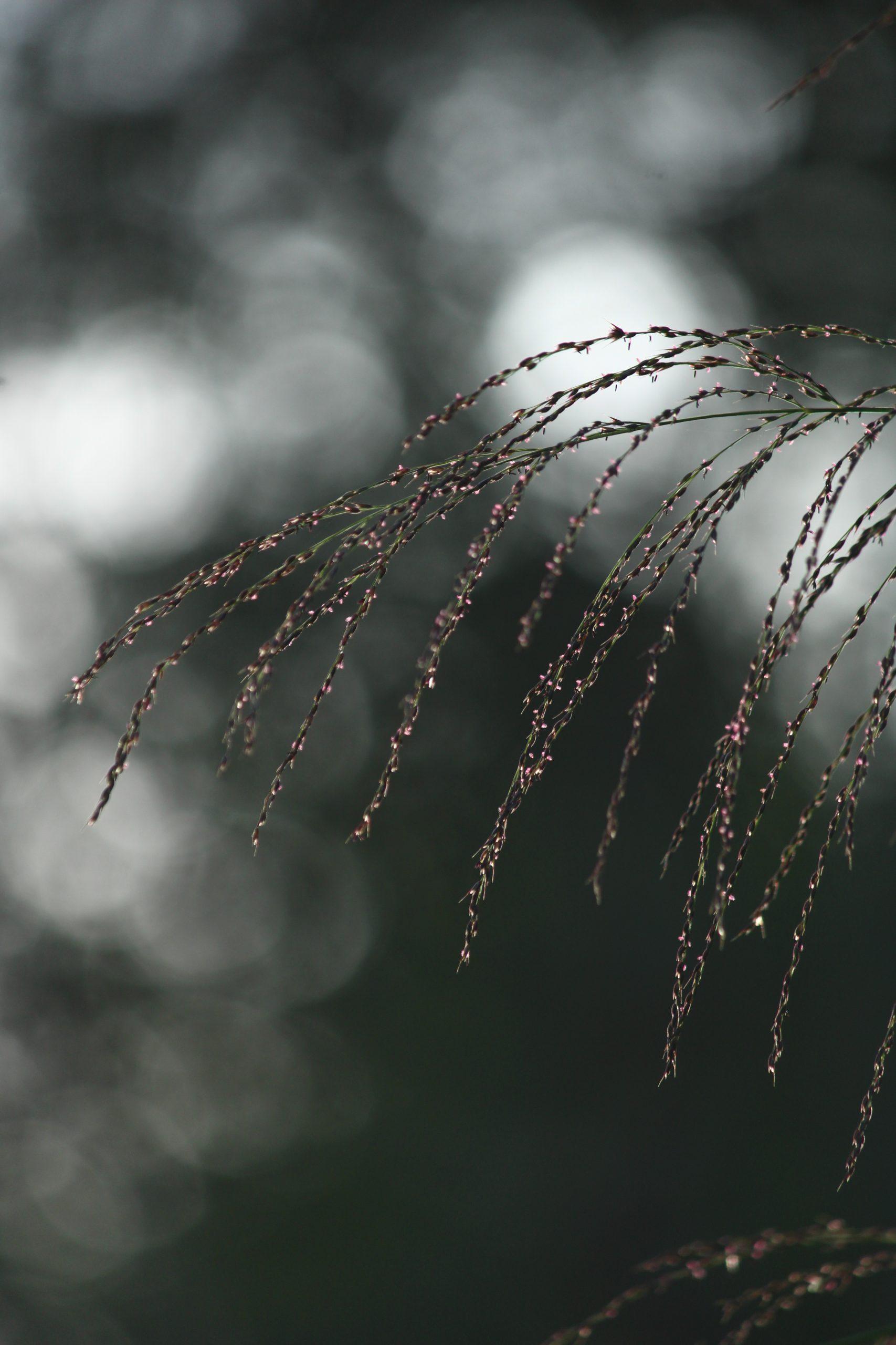 Burrs Leaf on Focus