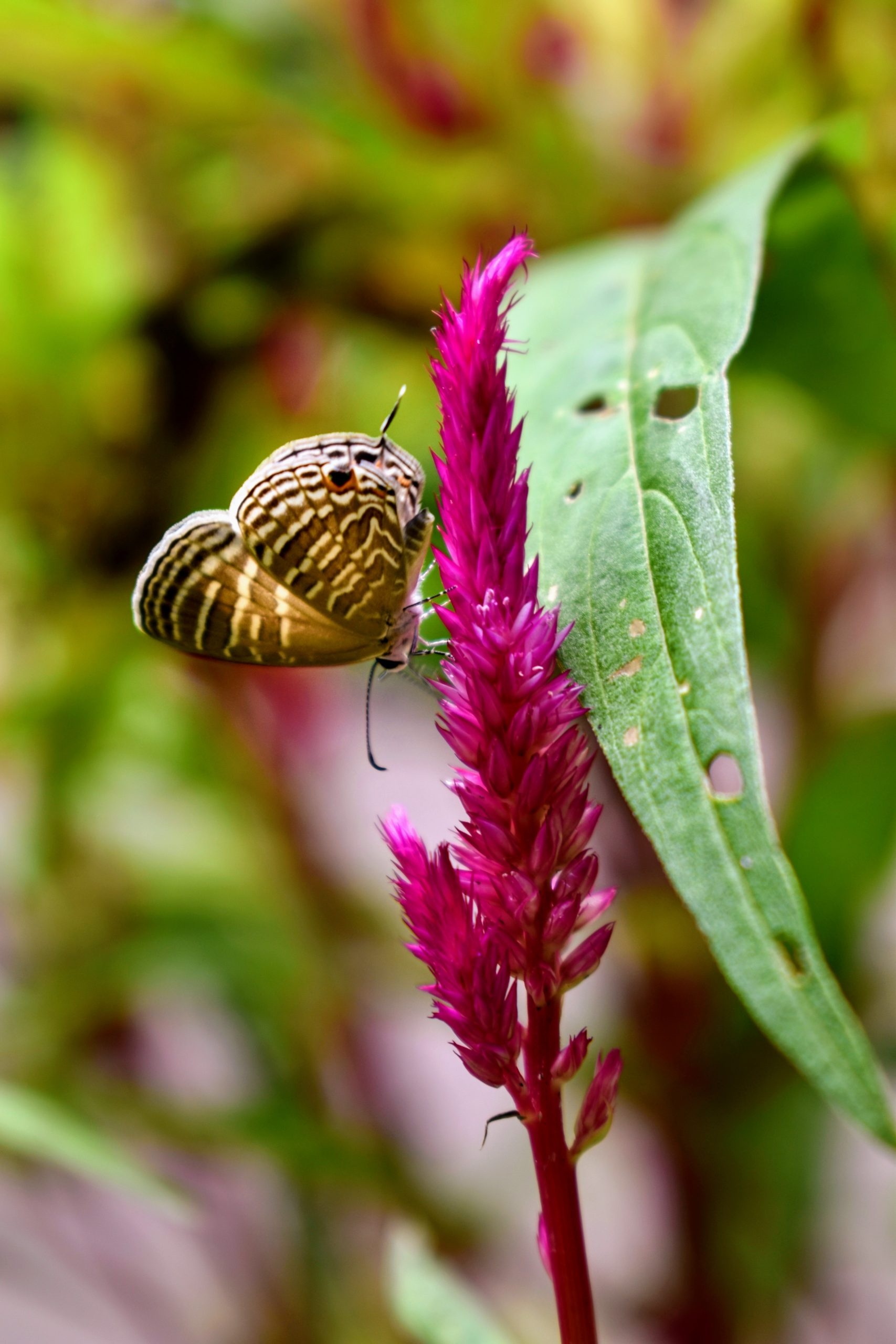 A butterfly sitting on a plant