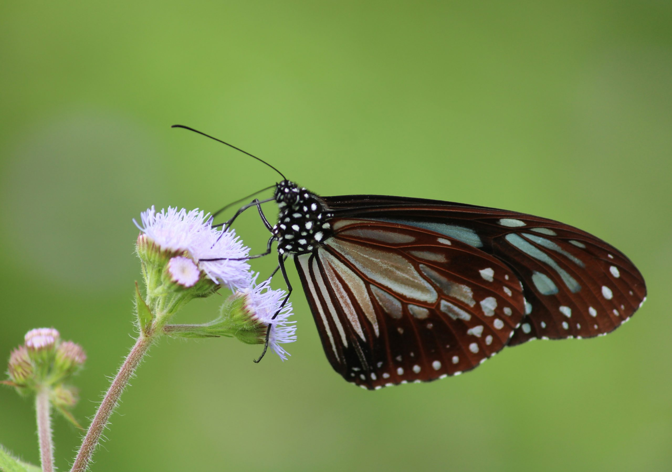 Butterfly in the Flower on Focus