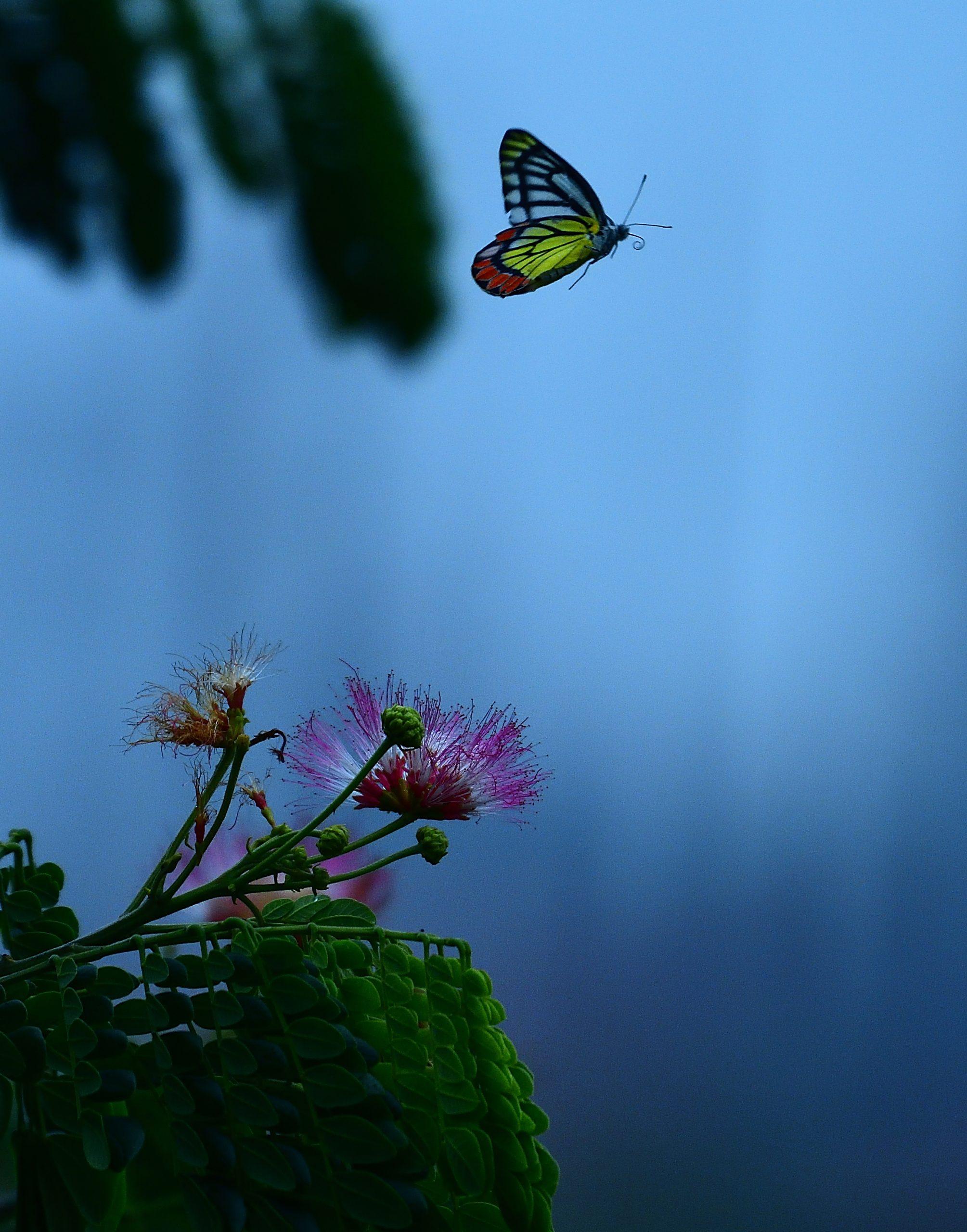 Butterfly on Flight