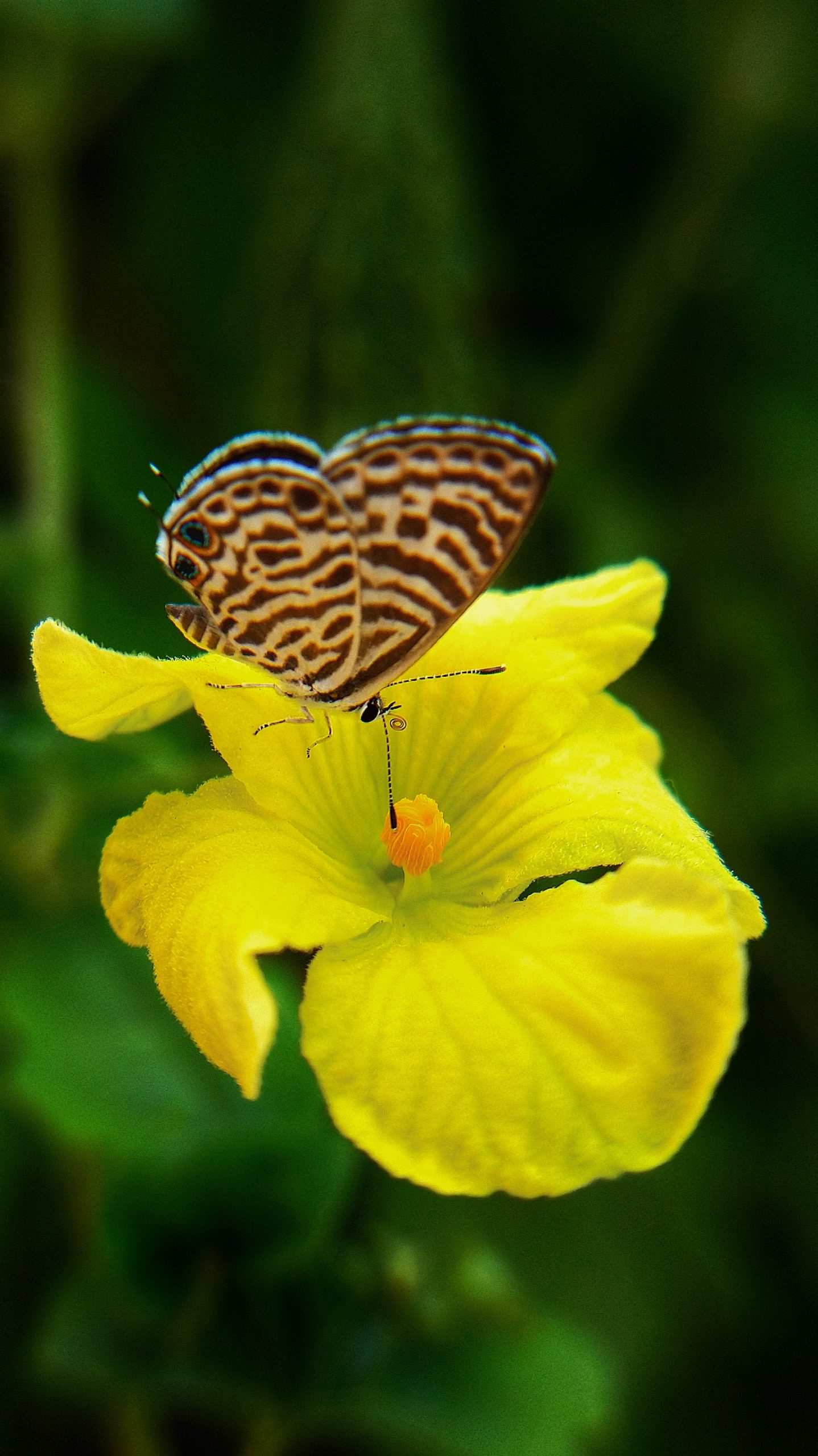 Butterfly hovering over a flower
