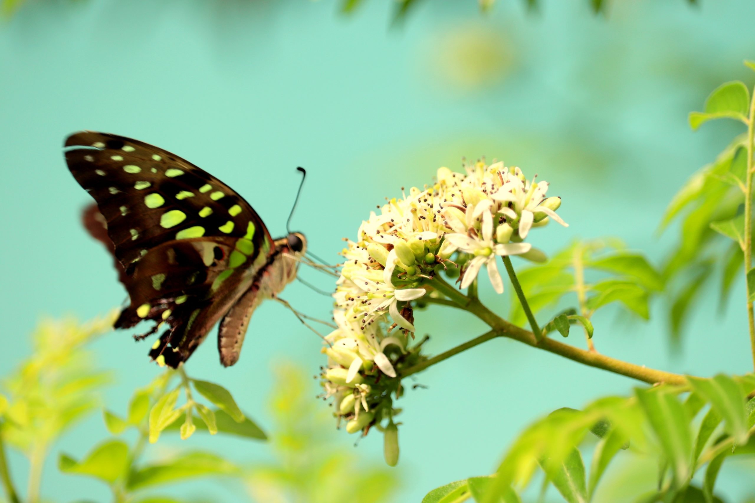 Butterfly sucking honey