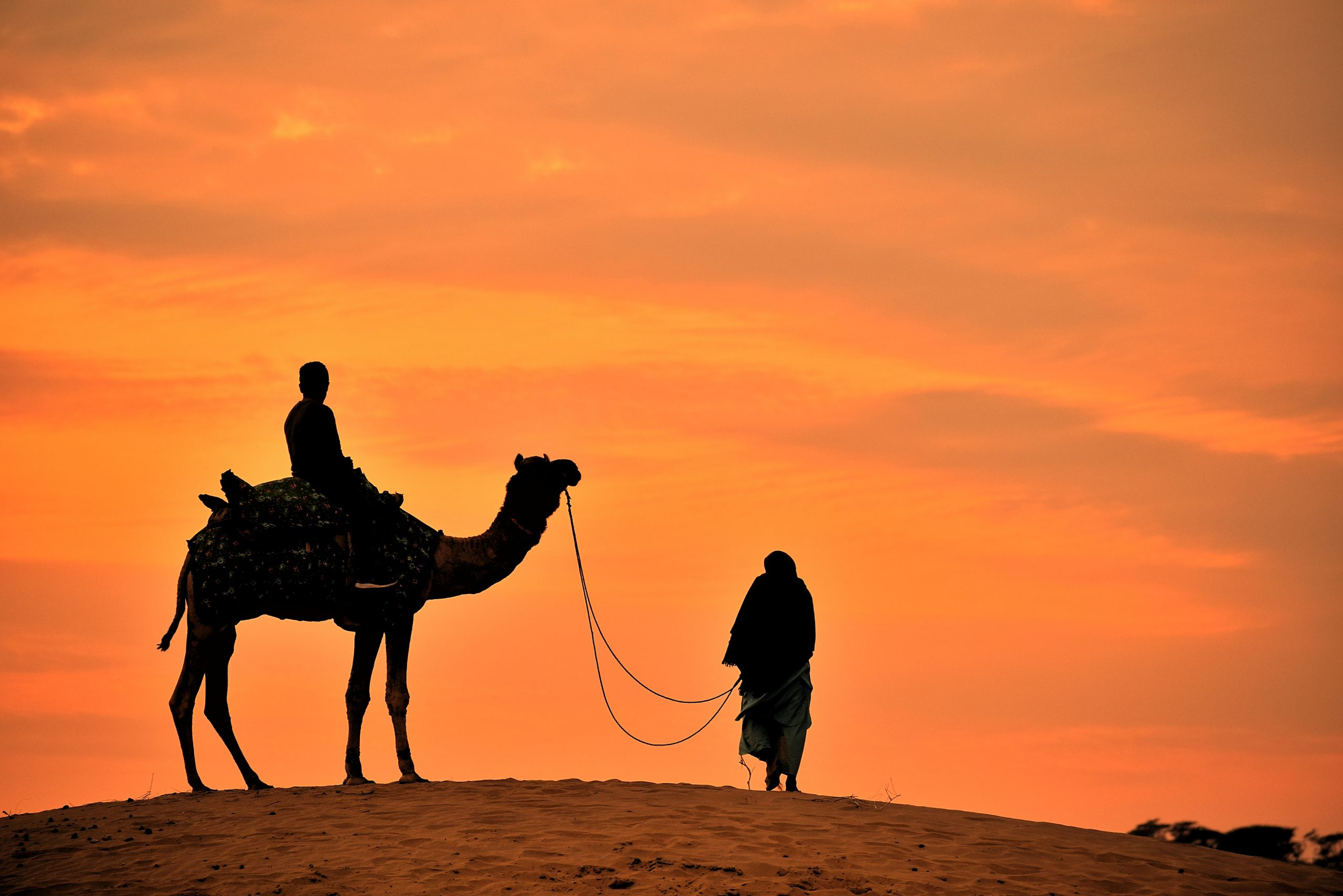 Camel ride during evening hours
