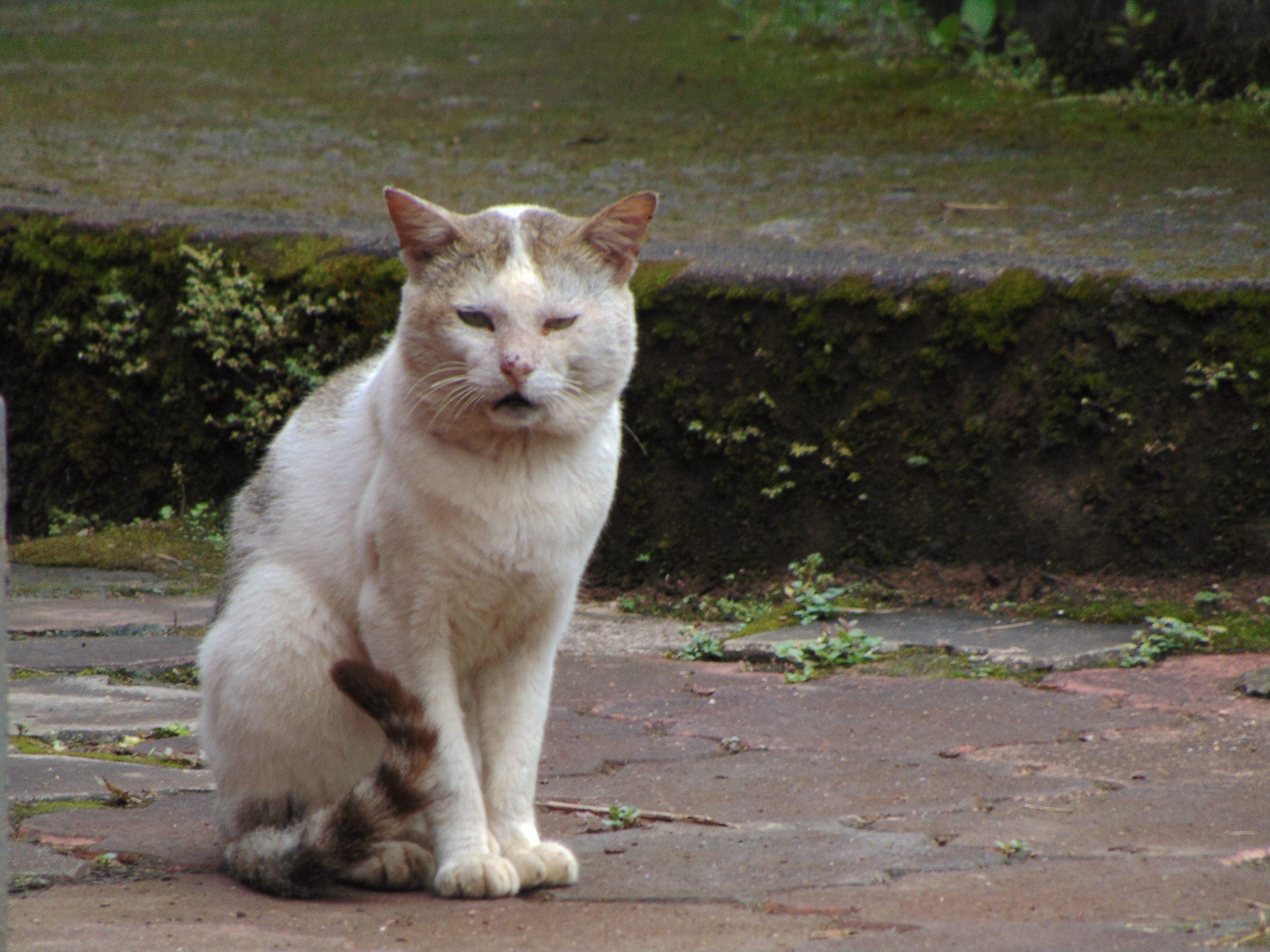 a cute cat in the street