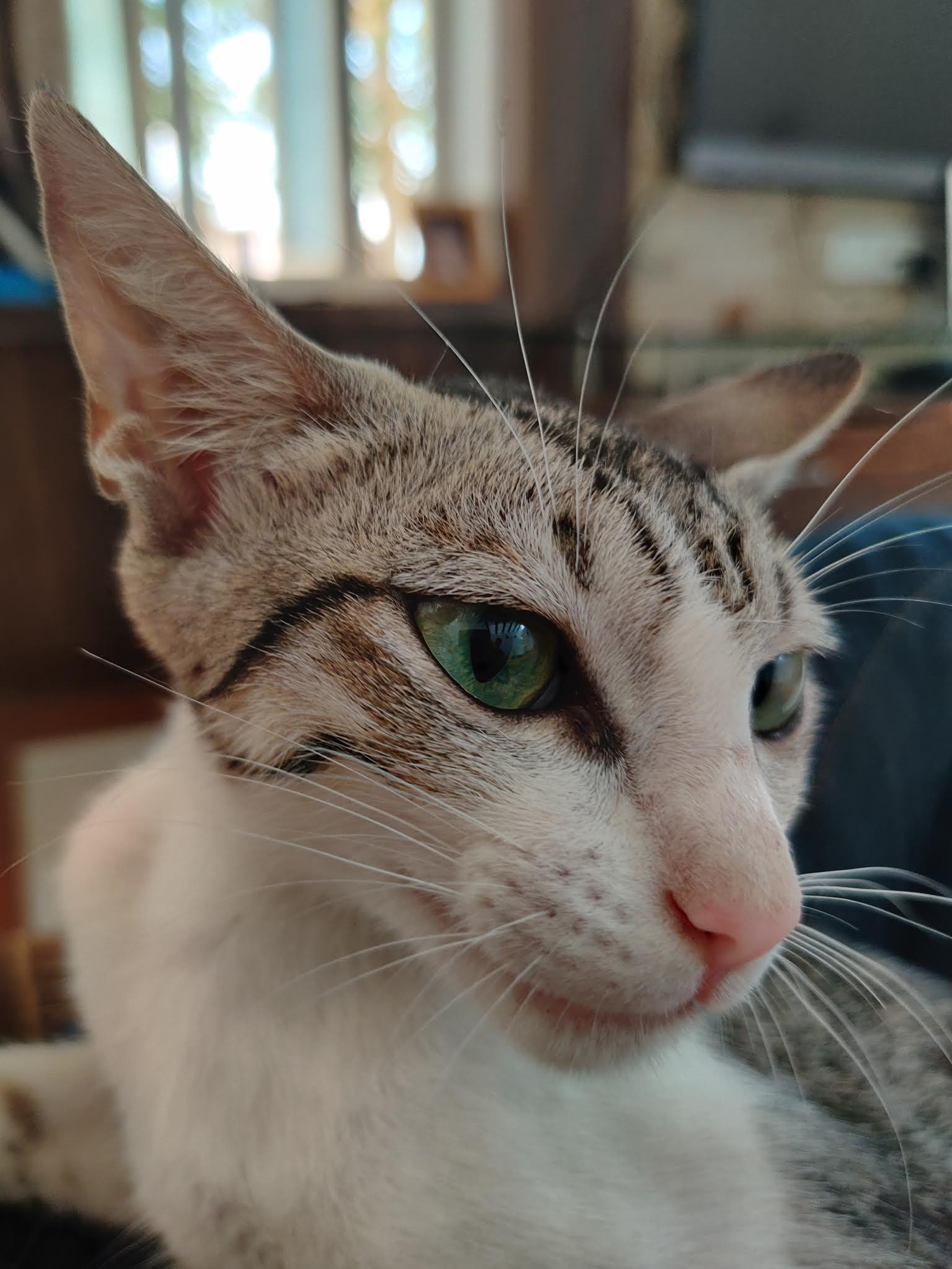 Cat Face on Focus