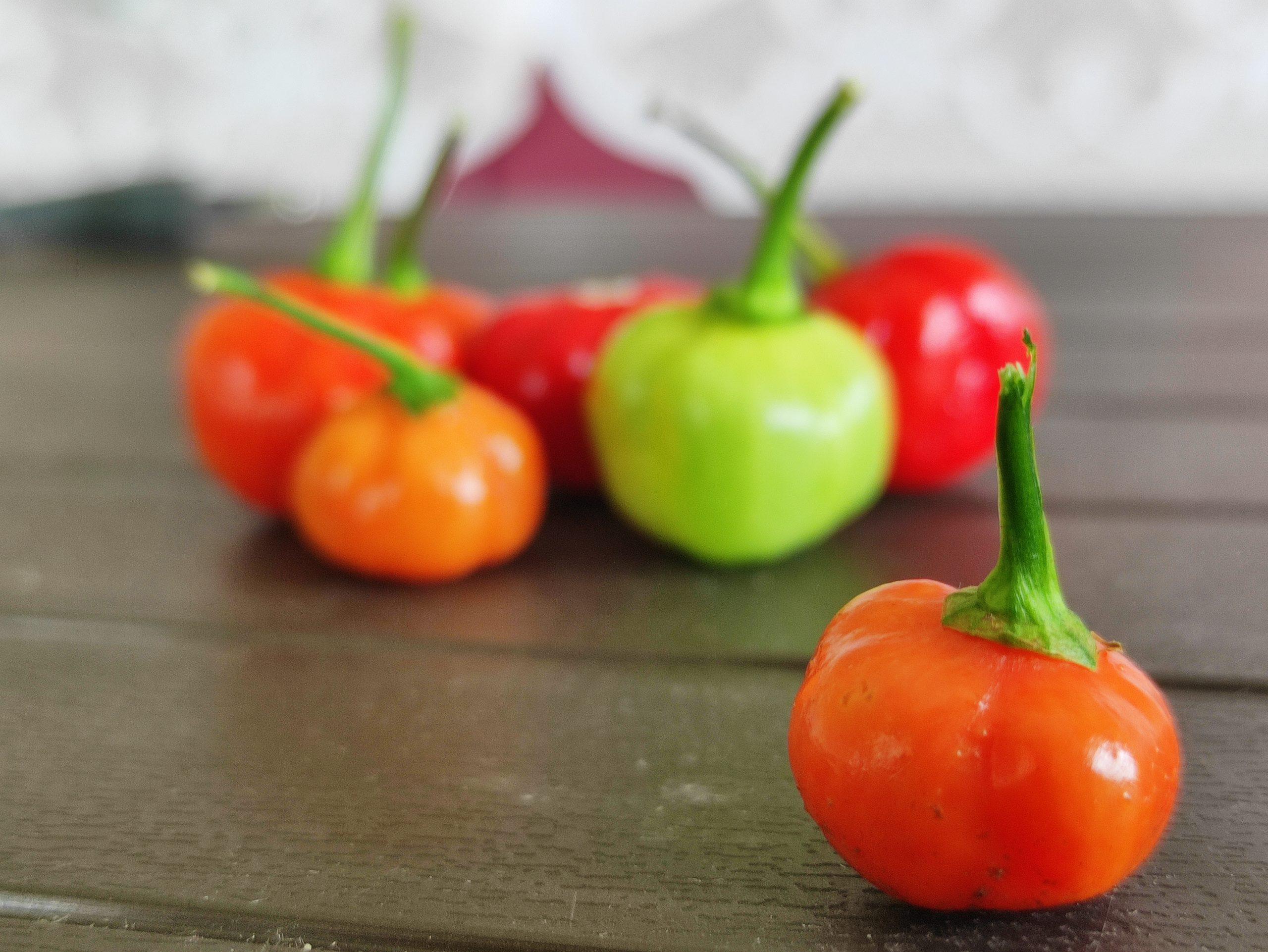 Chili Pepper on Focus