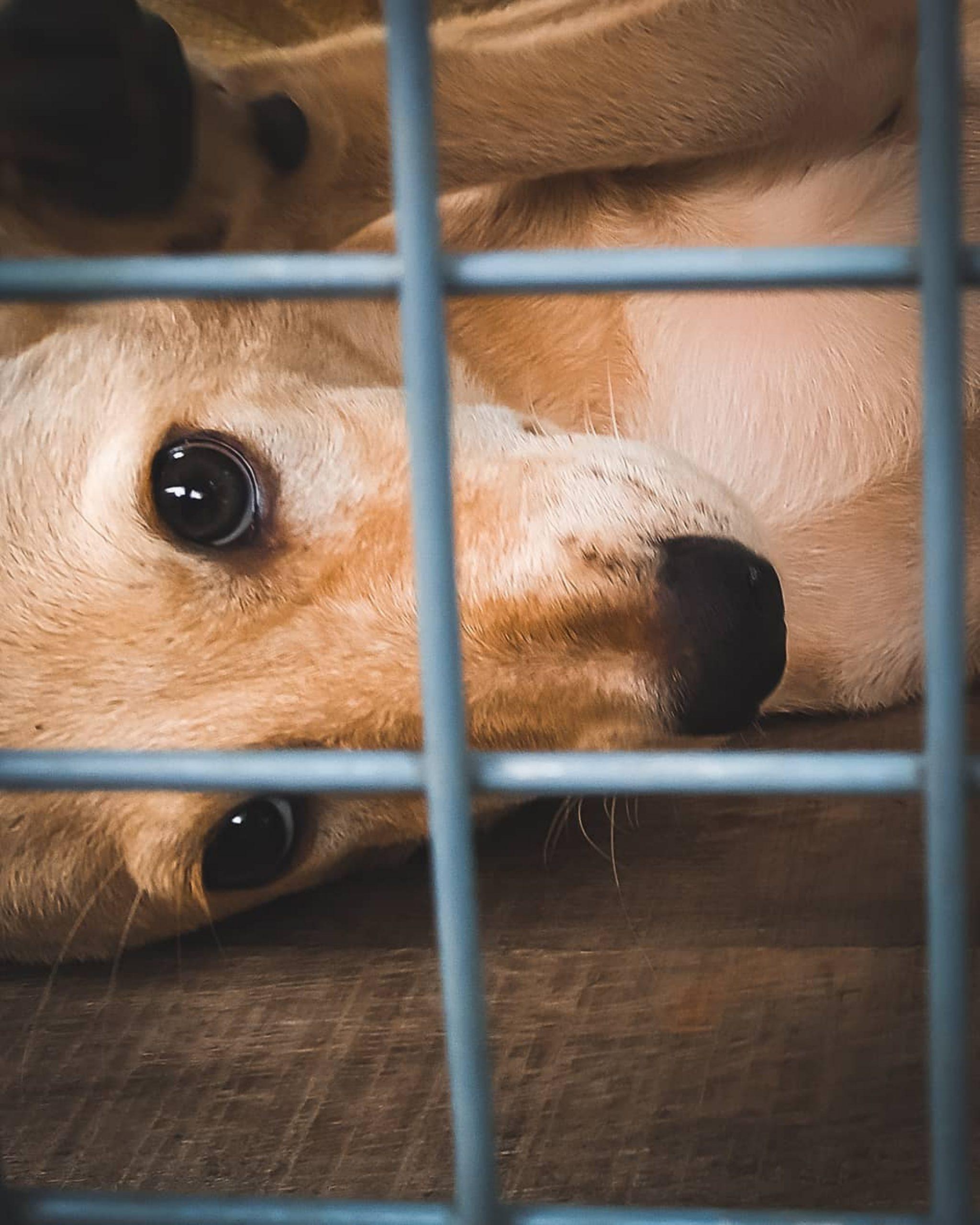 Close-up Shot Face of a Dog