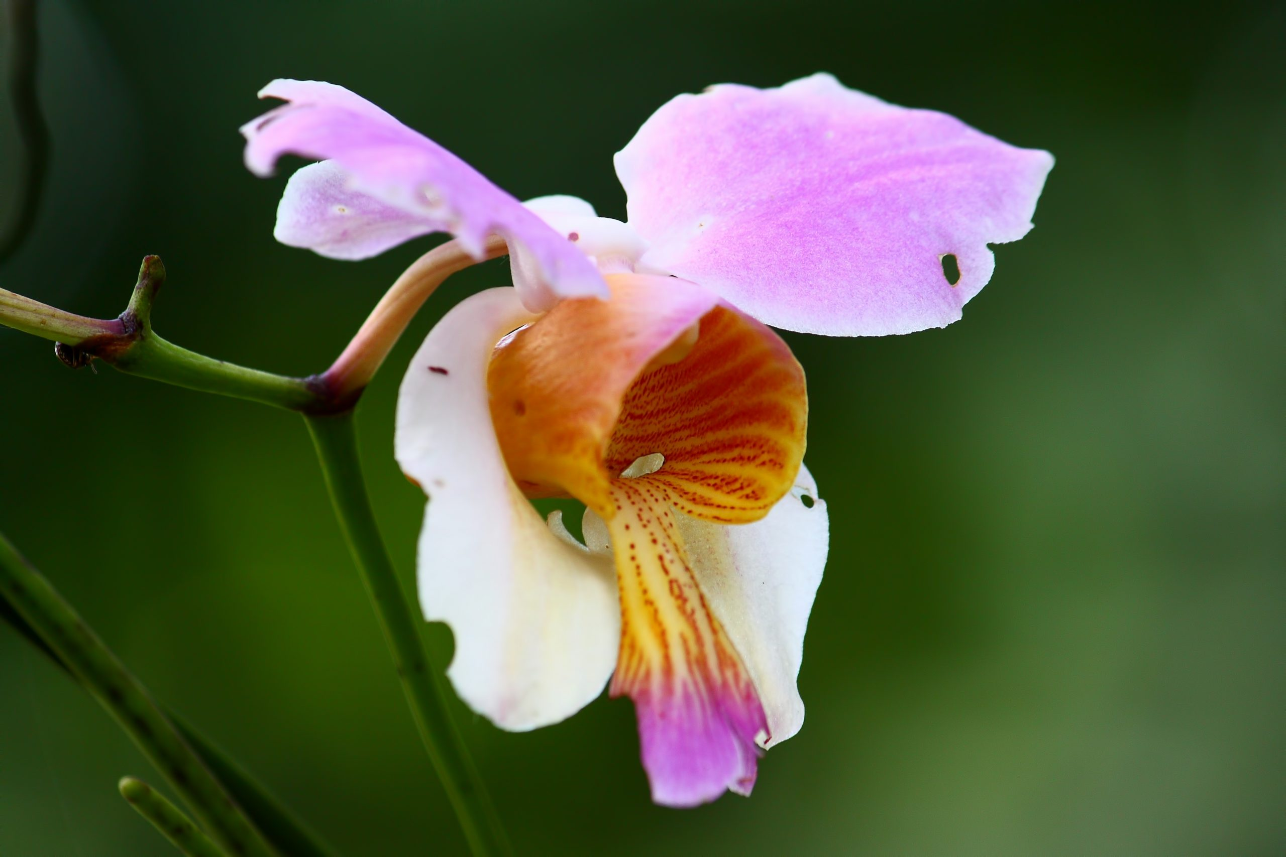 Close-up of beutiful Orchid flower