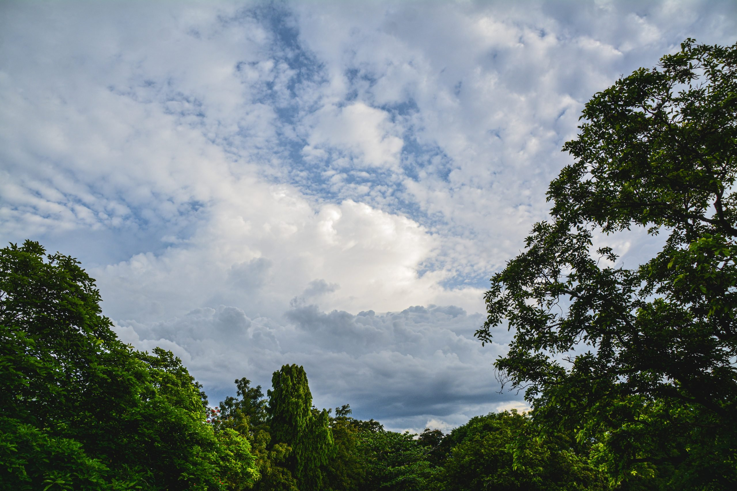 Cloudy sky on forest