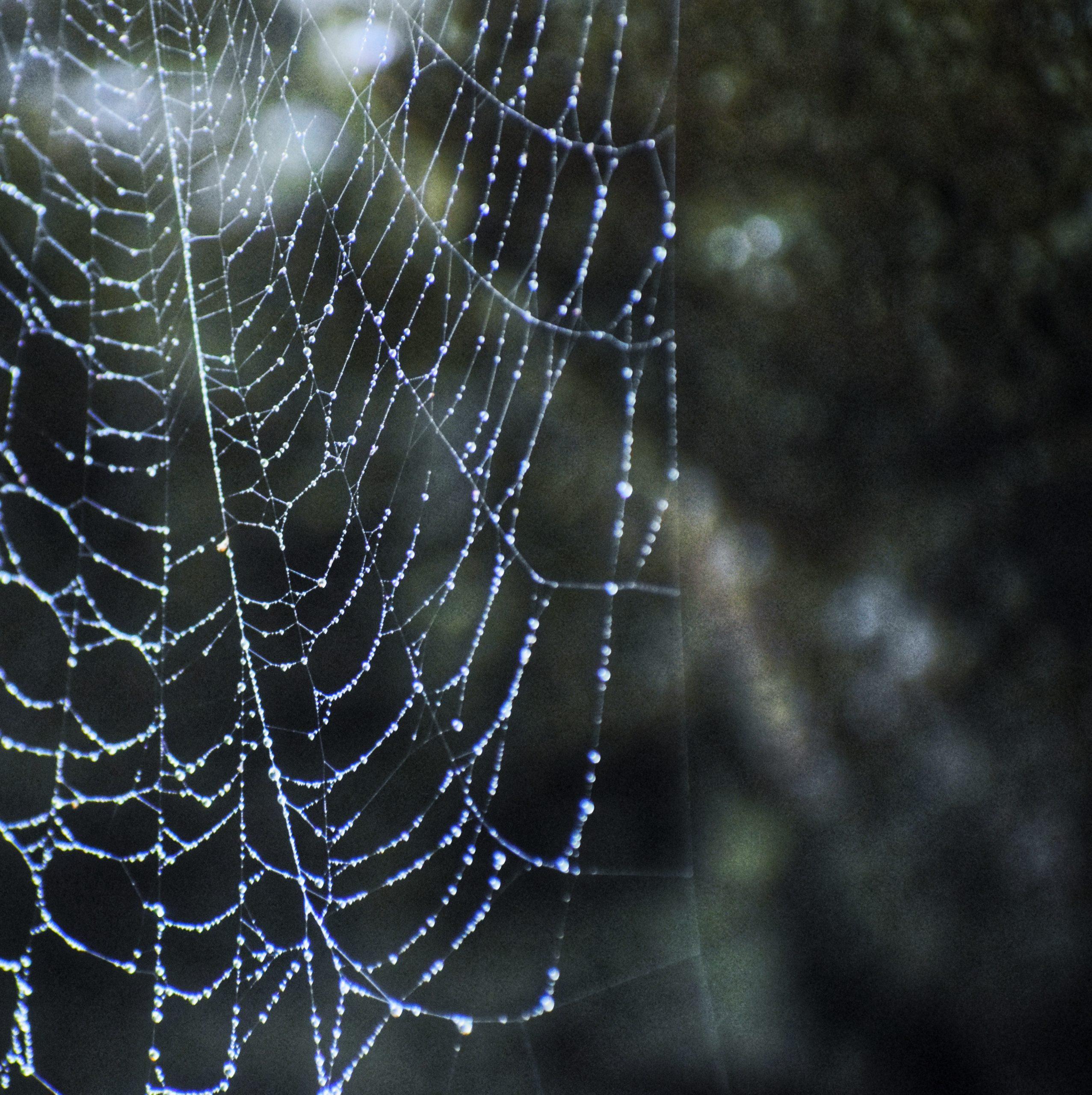 Wet cobweb