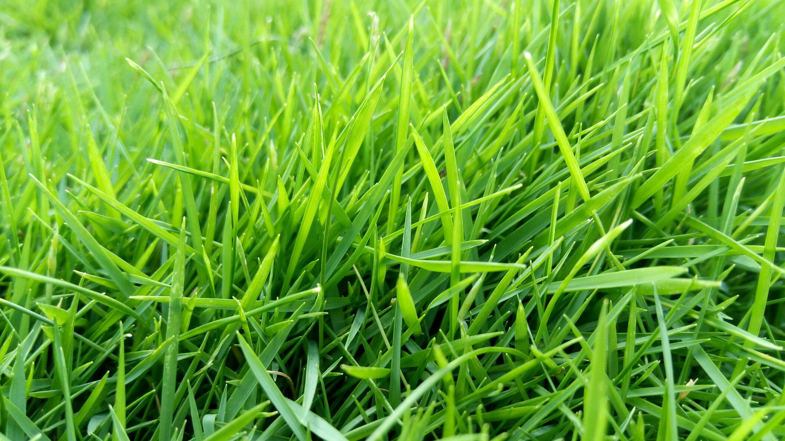 Straw of green grass