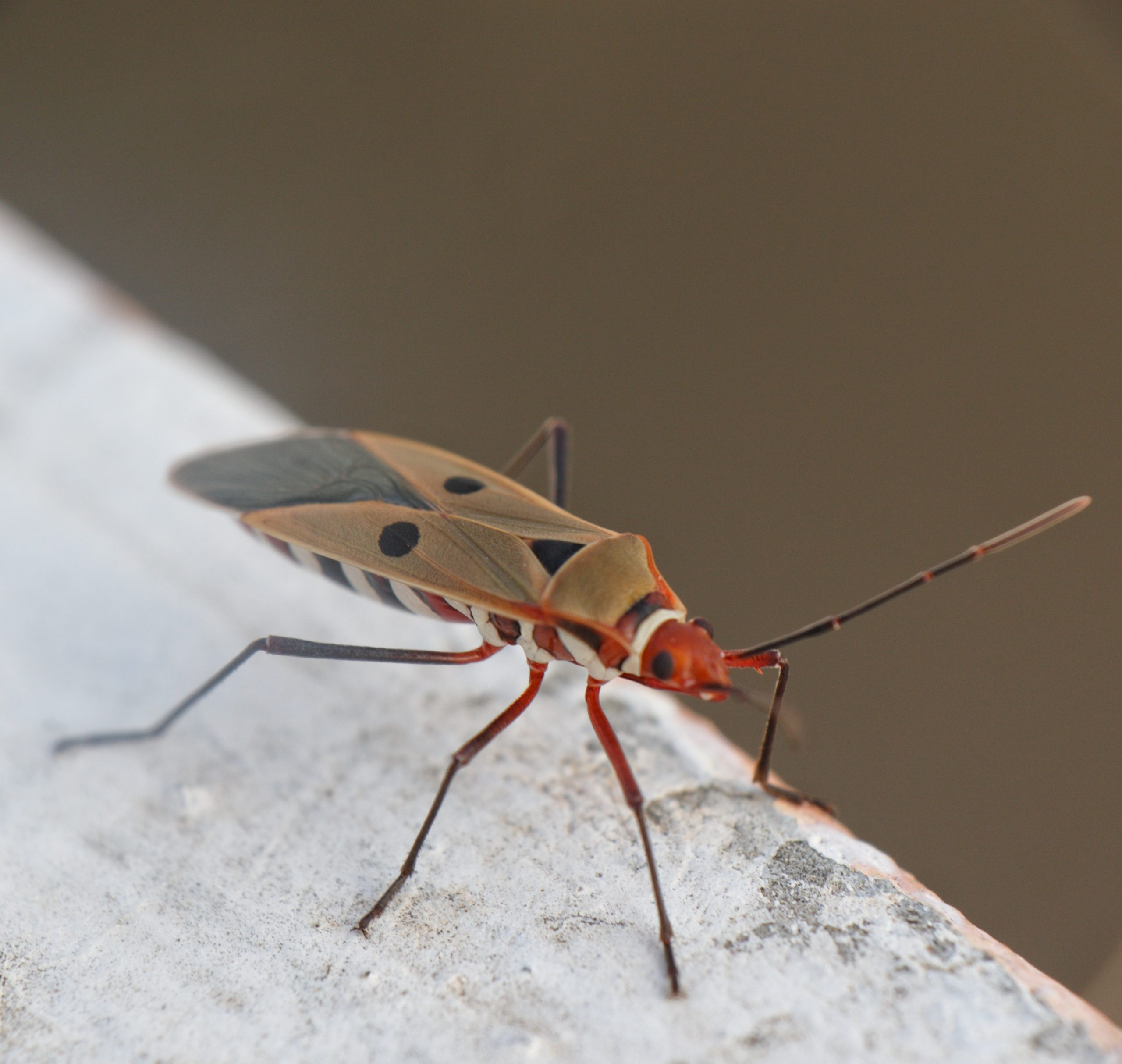Colorful Insect on Focus