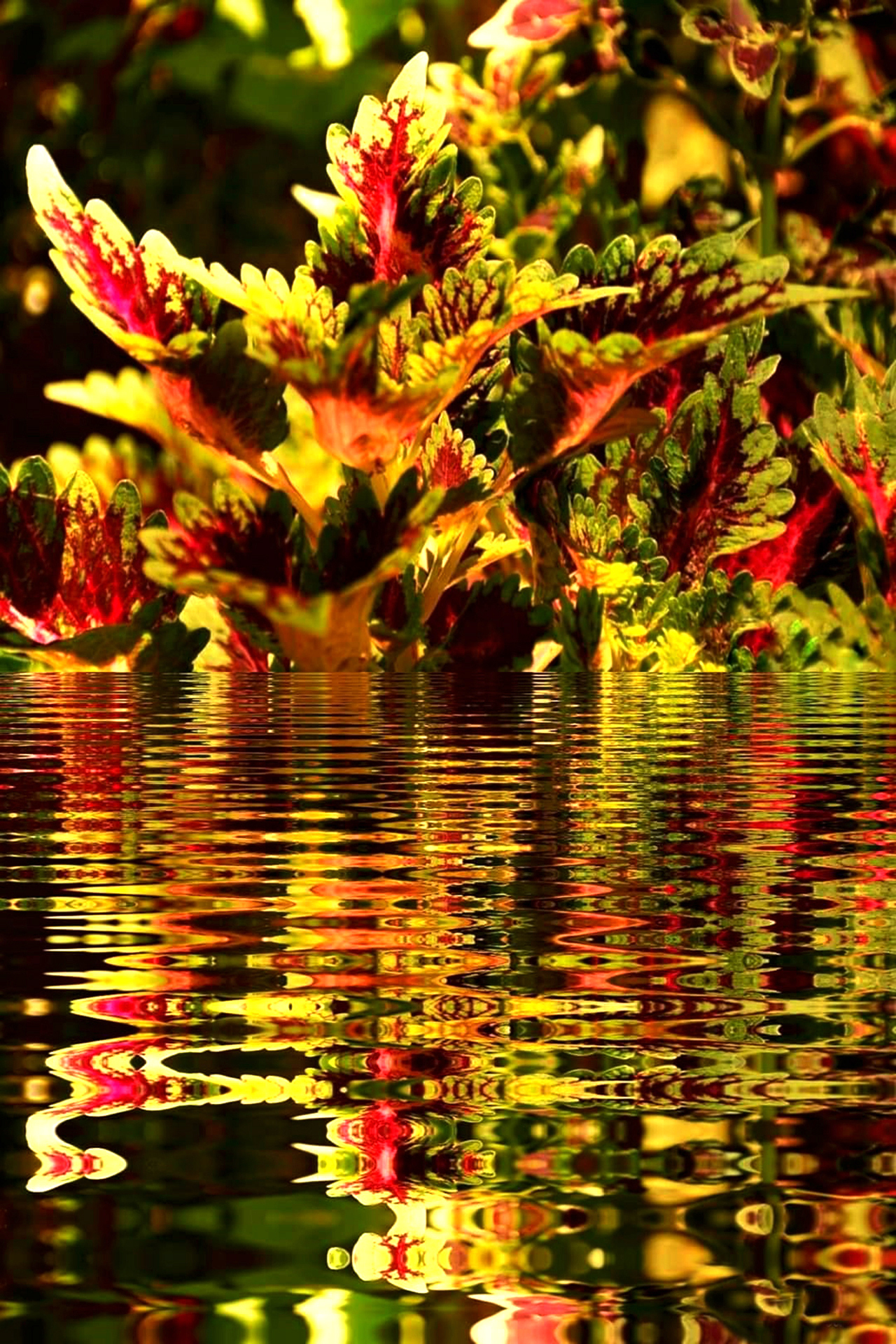 Colorful Plant Leaves Reflection on Waters