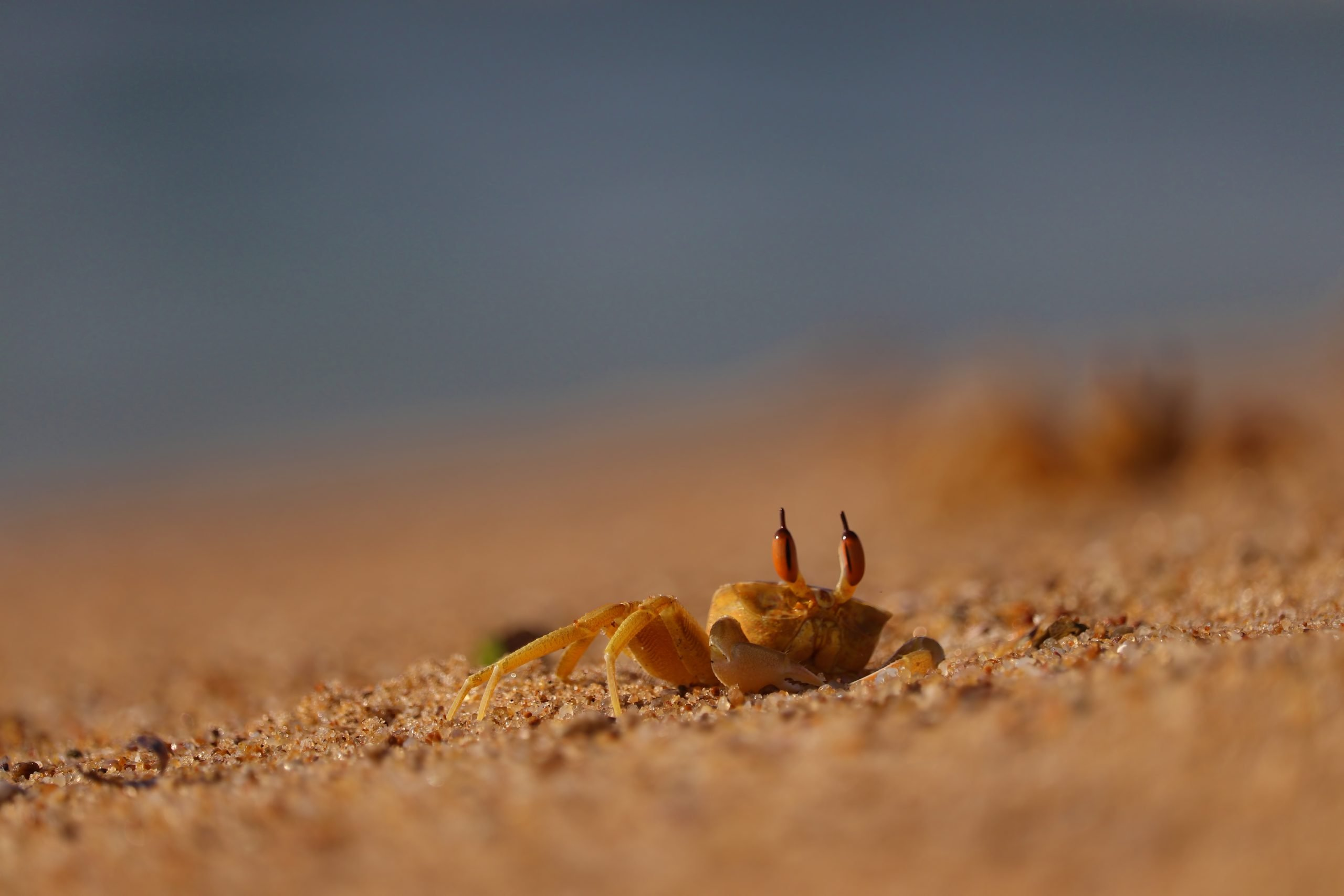Crab crawling on the sand