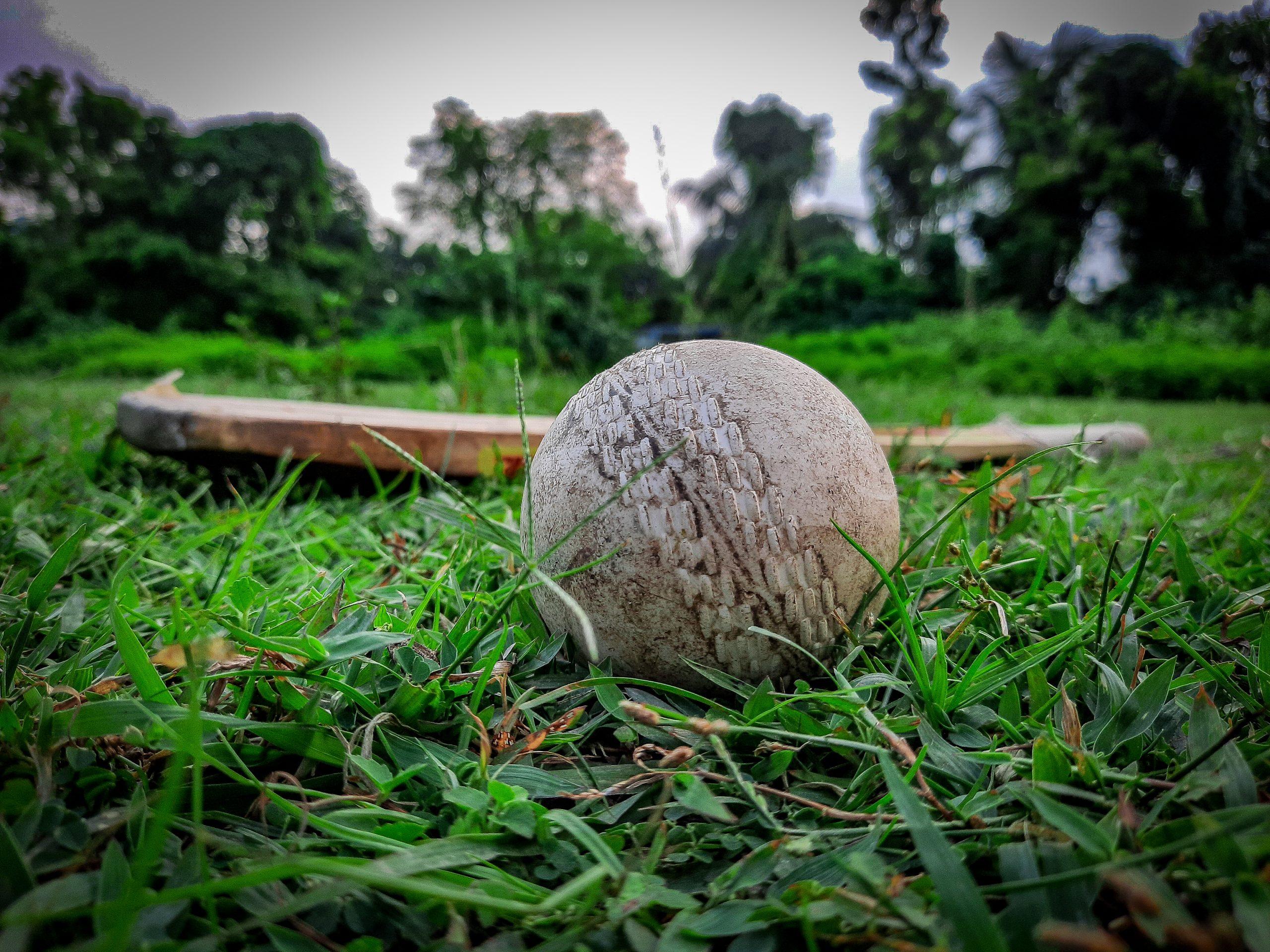 Cricket ball and bat on grass