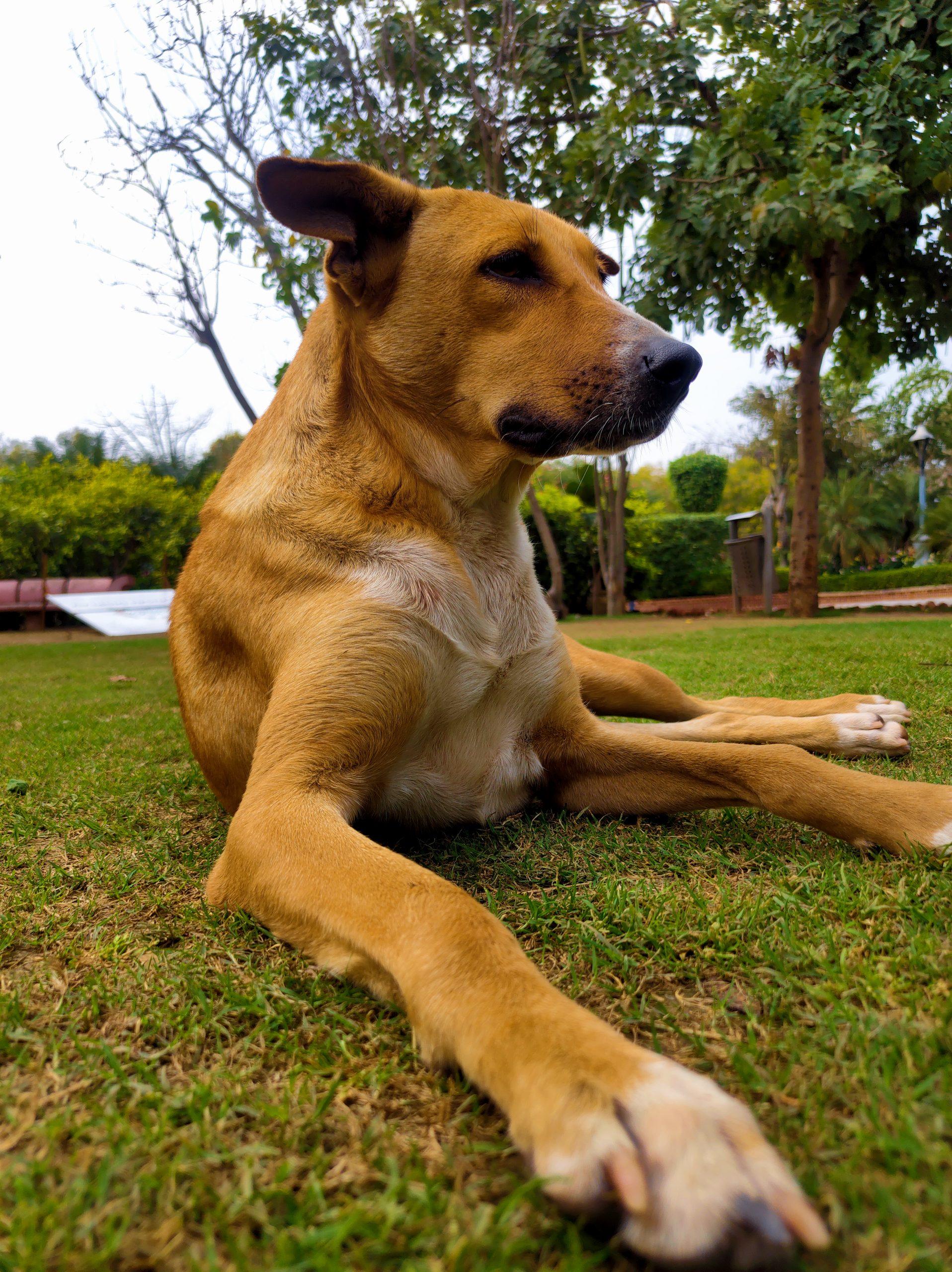 Cute Dog Sitting Outdoor