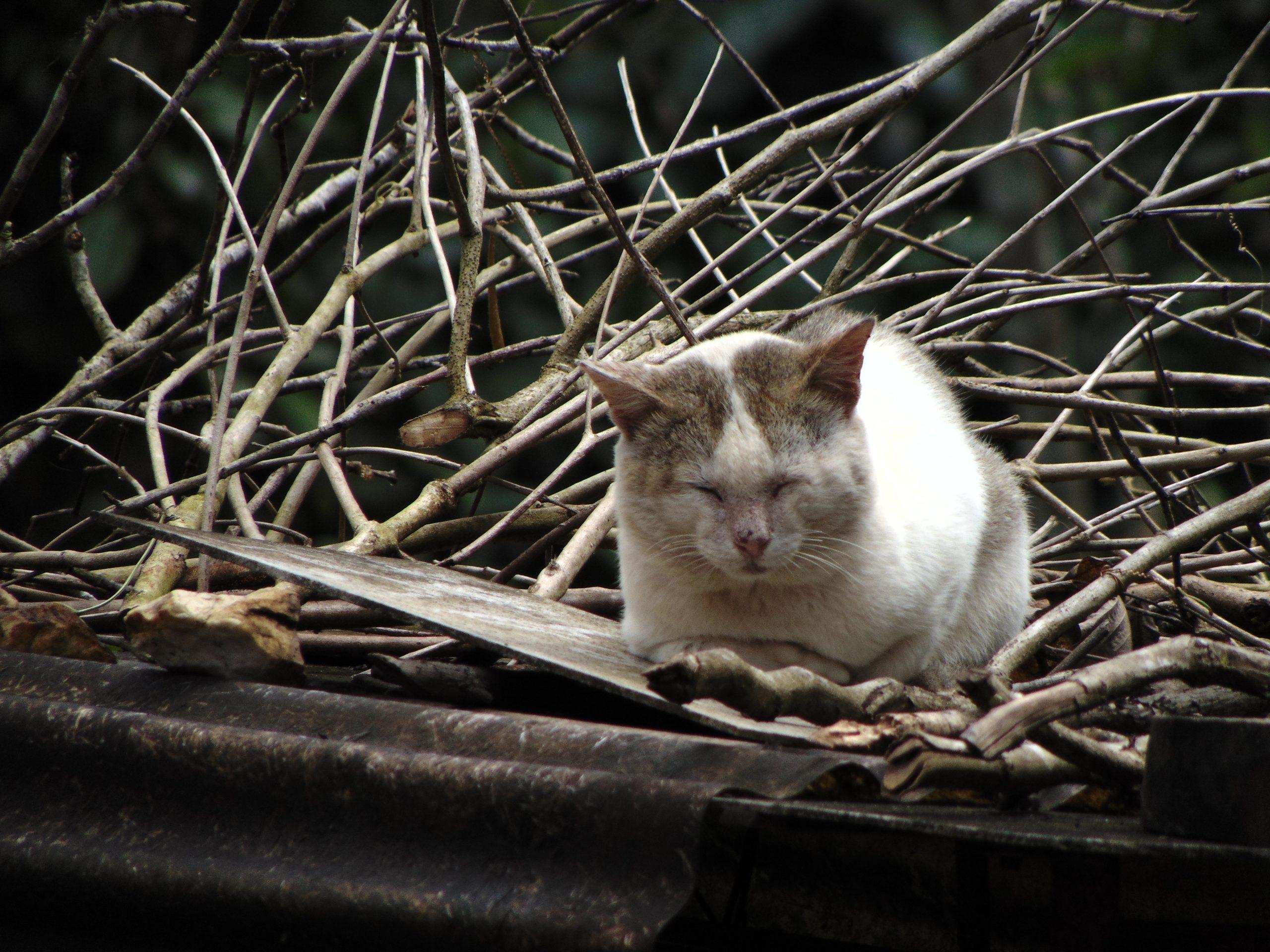 Cute cat on Focus