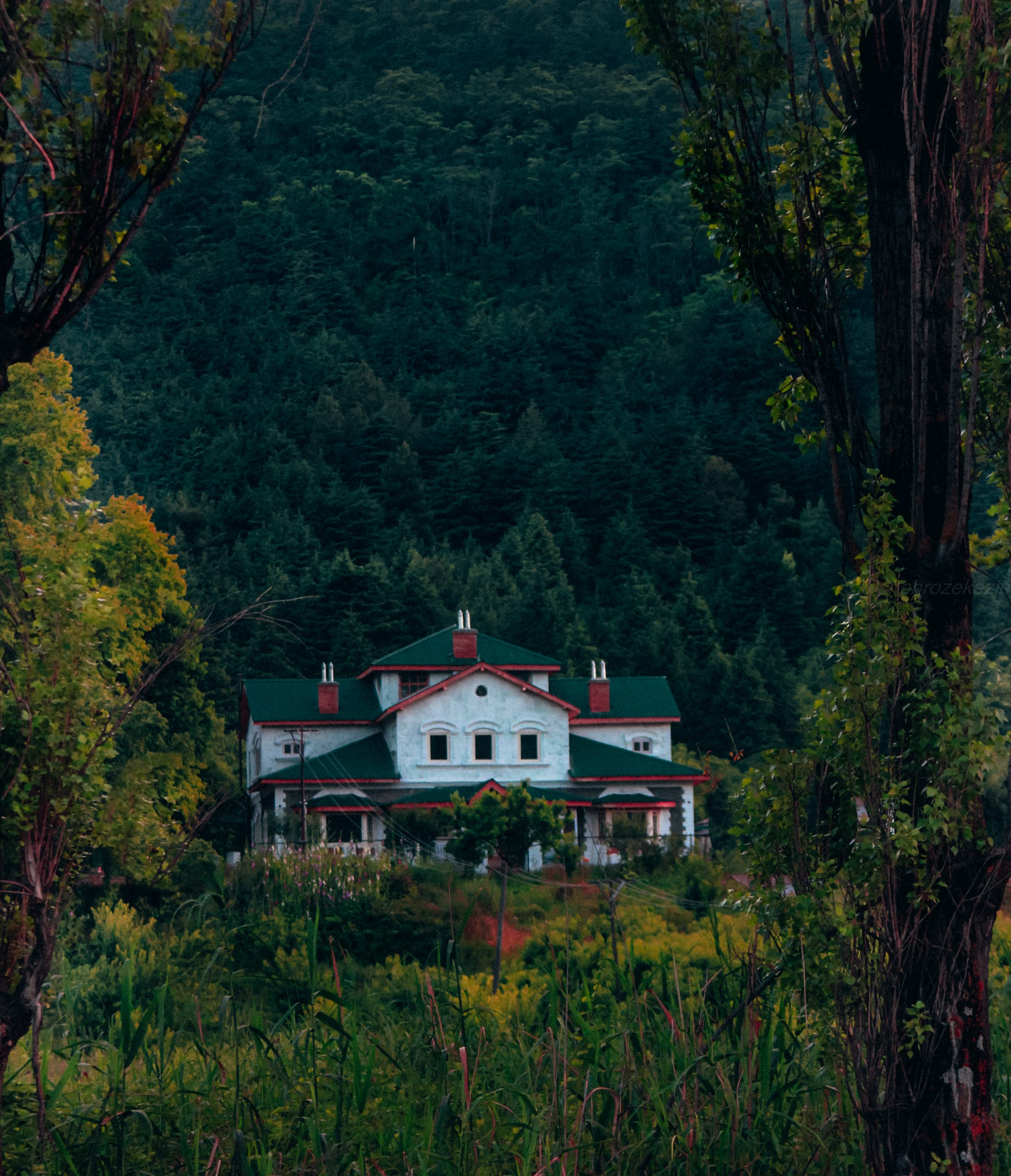 House amid a forest