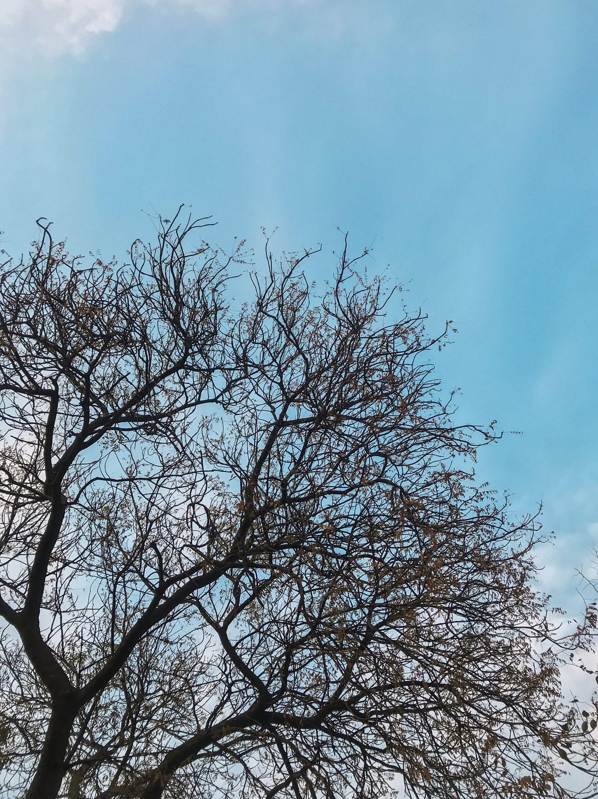 Dark Solitary Tree