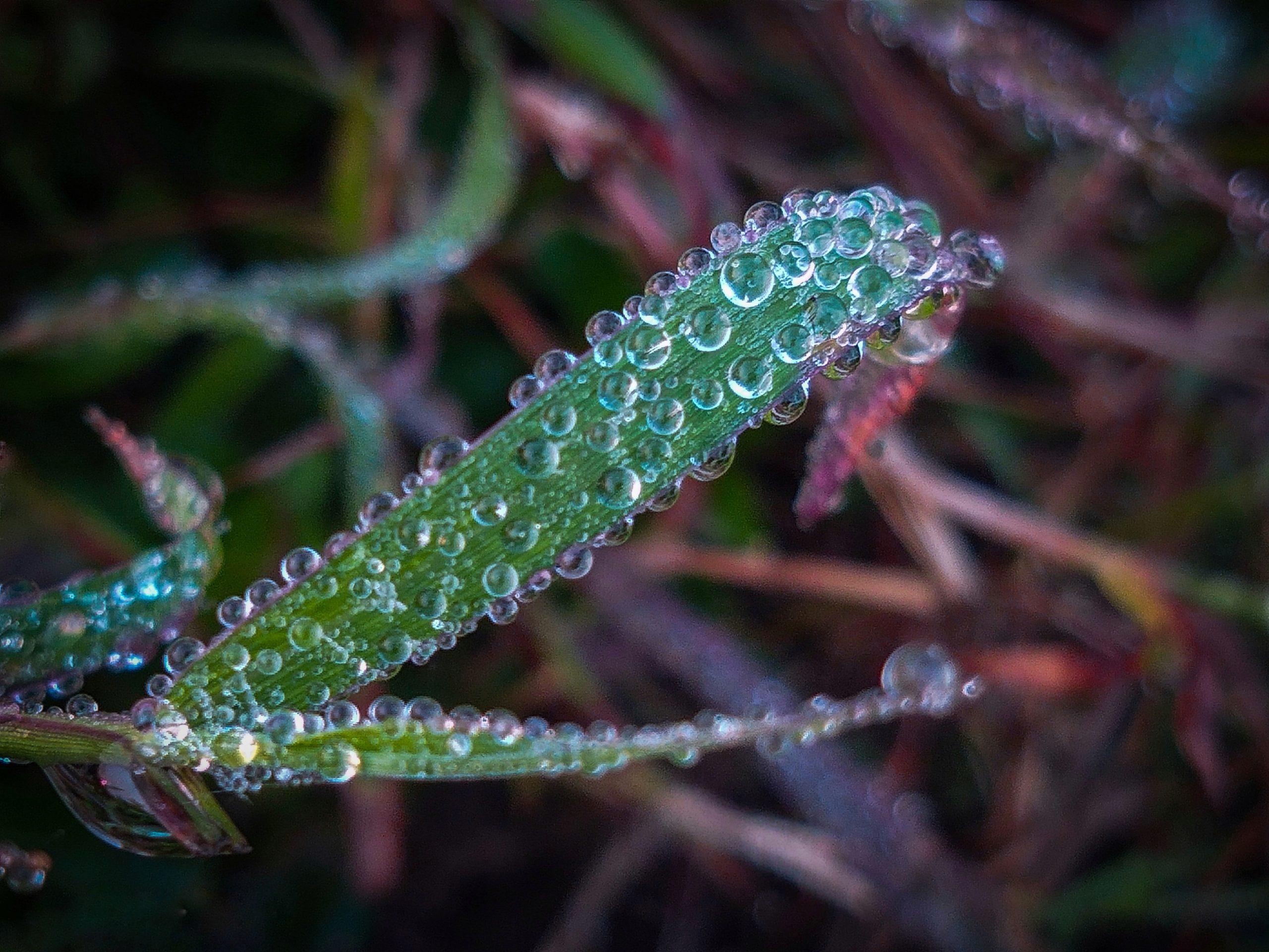 Dew droplets on a leaf