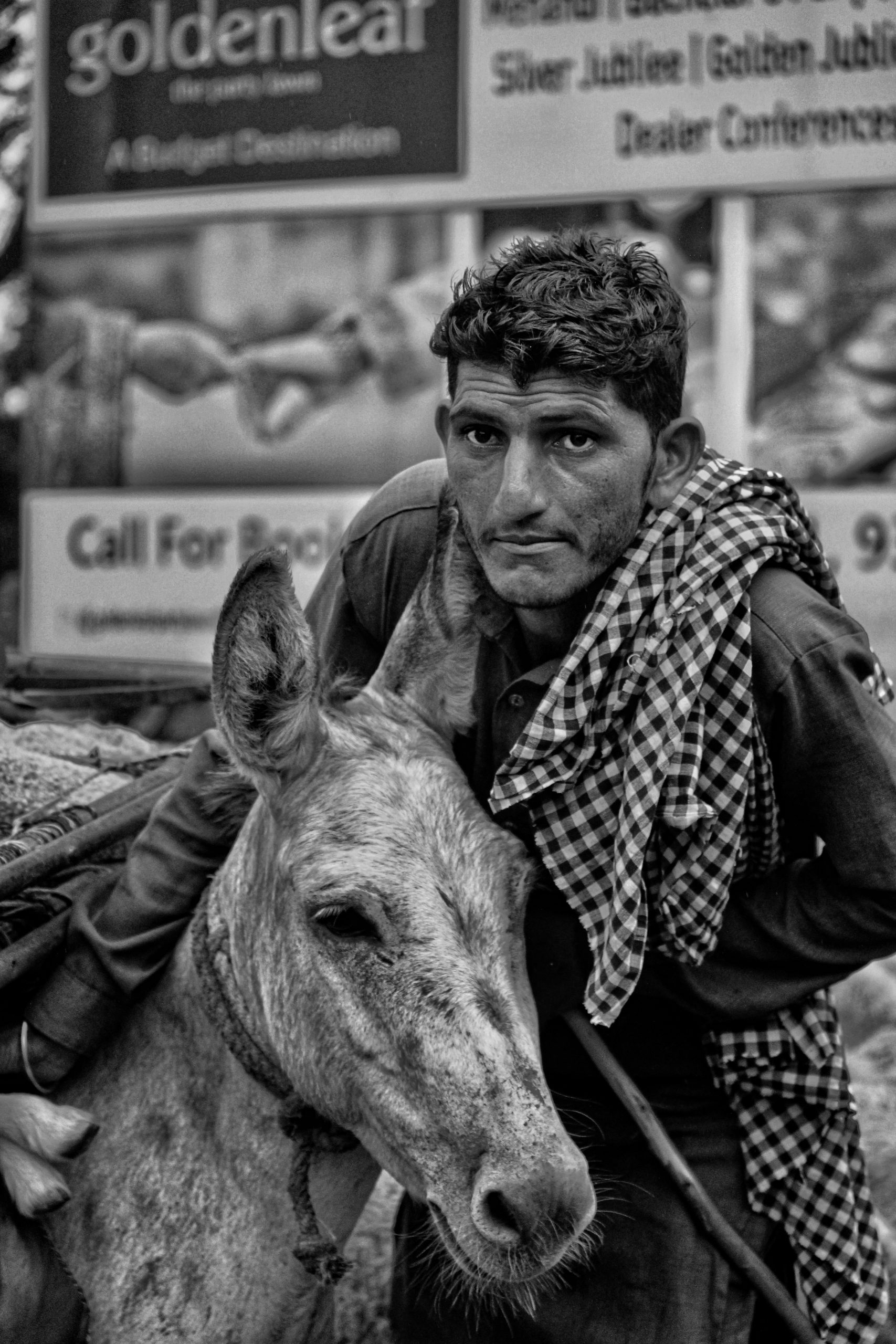 Donkey with a Man