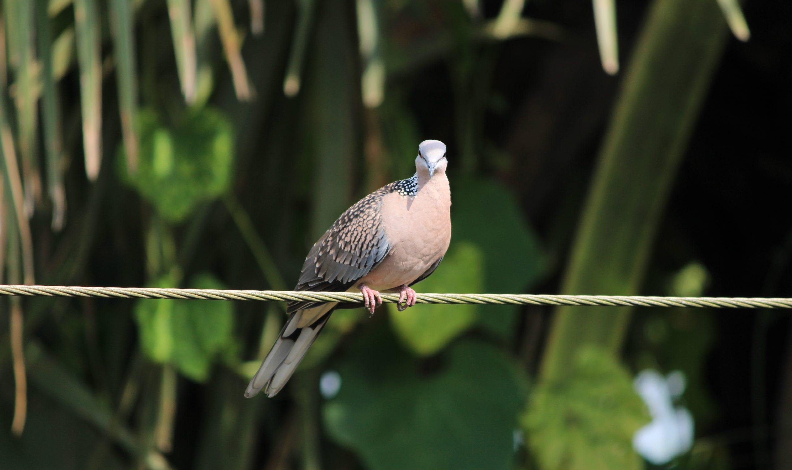 Bird perched on a wire