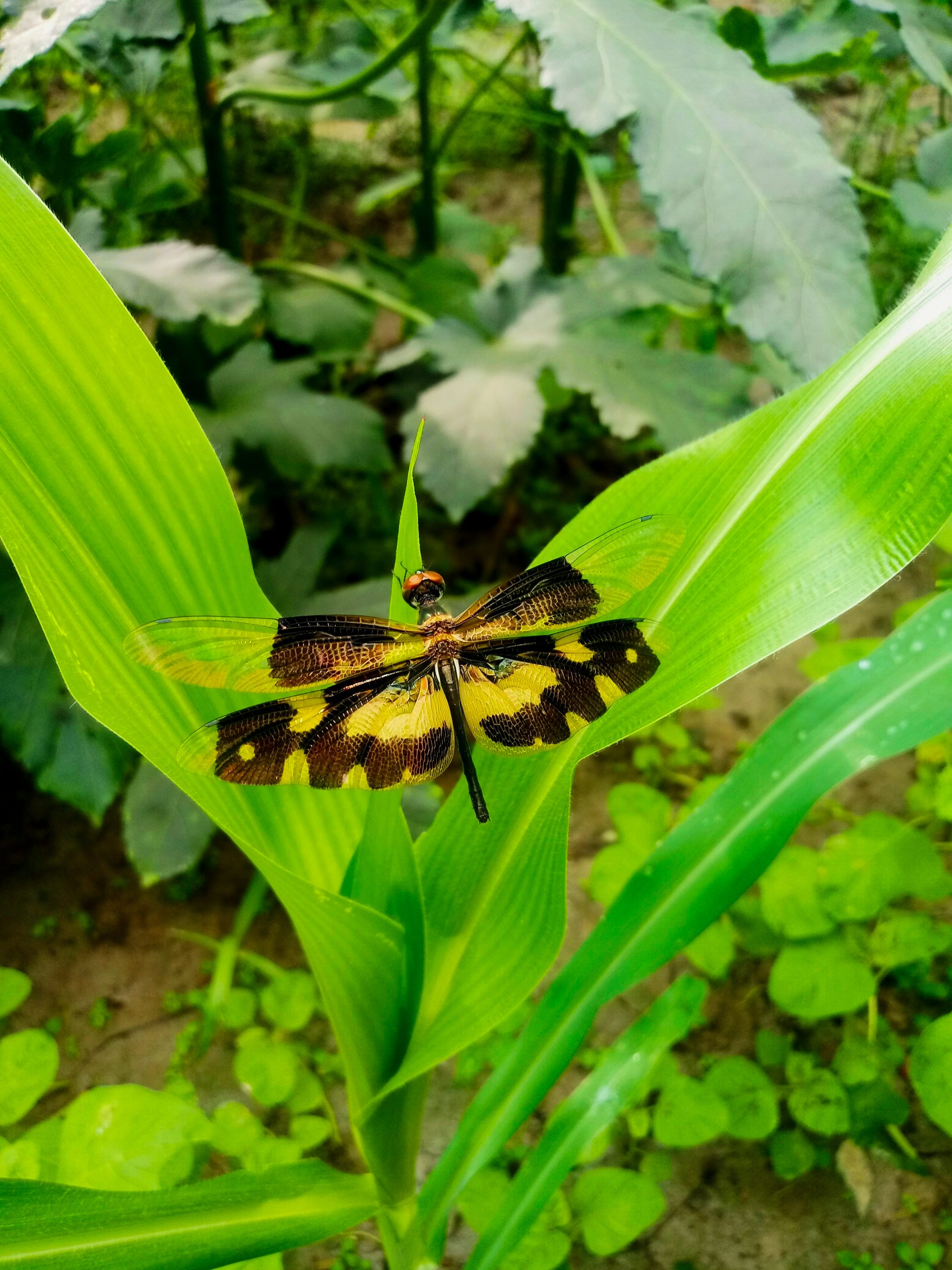 Dragon Fly on Leaves