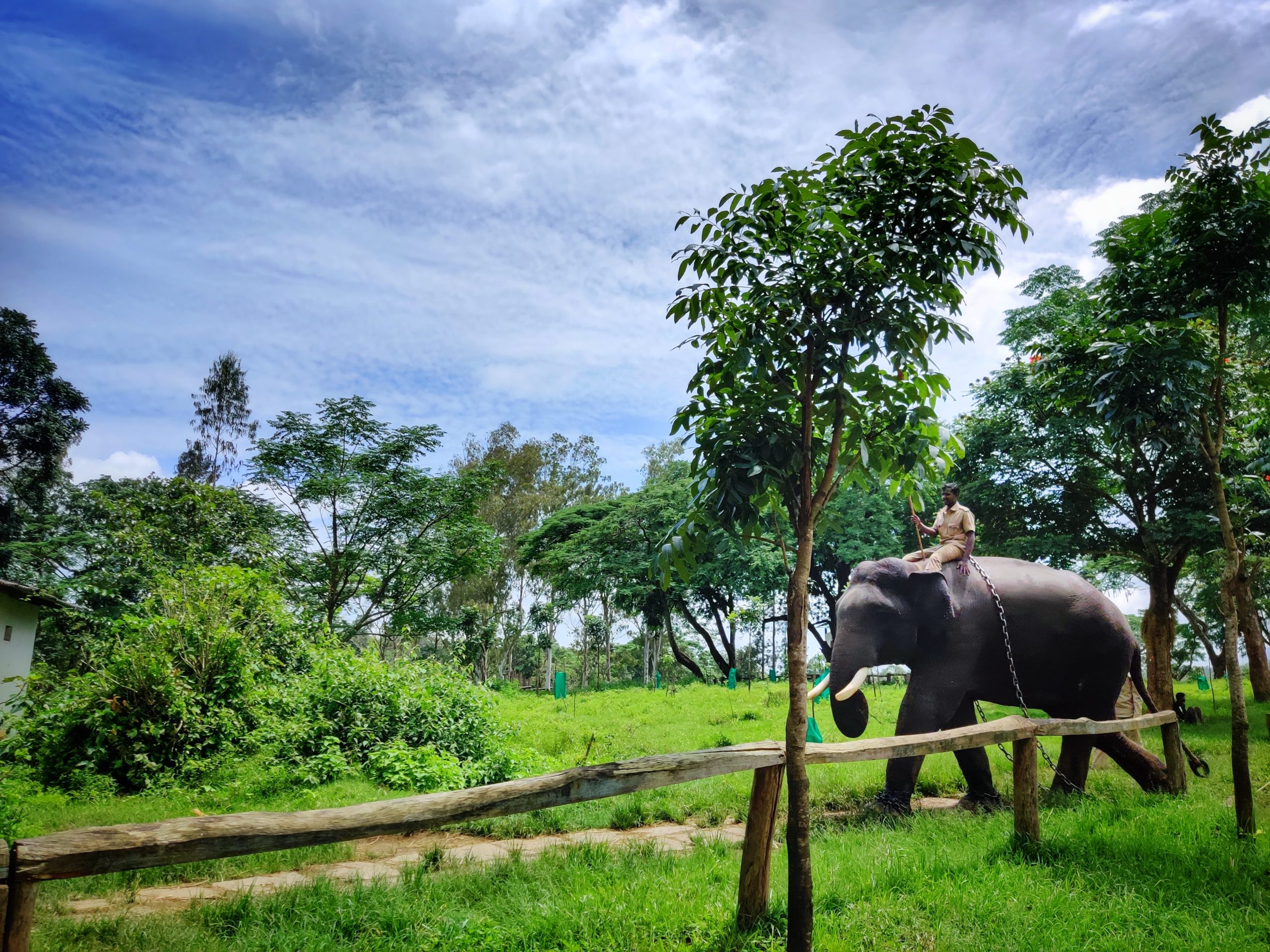 Dubare Elephant Camp coorg