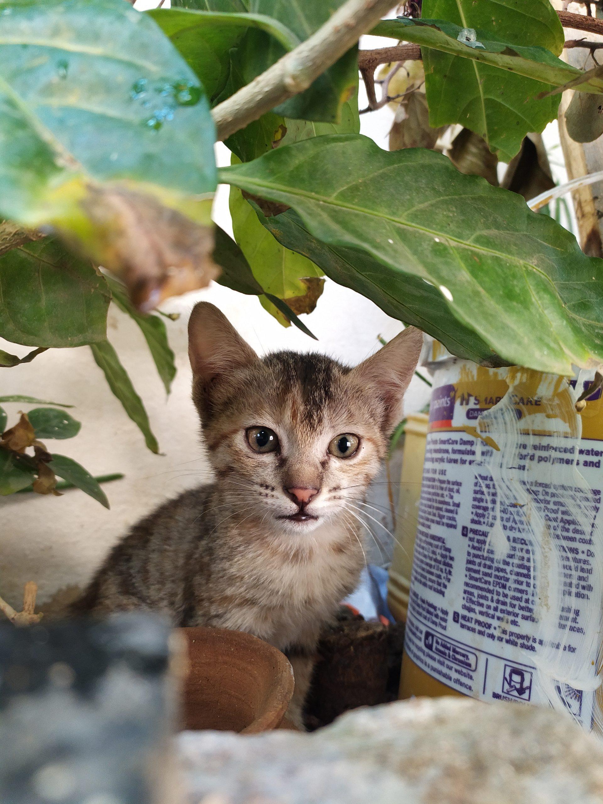 Kitten under a plant