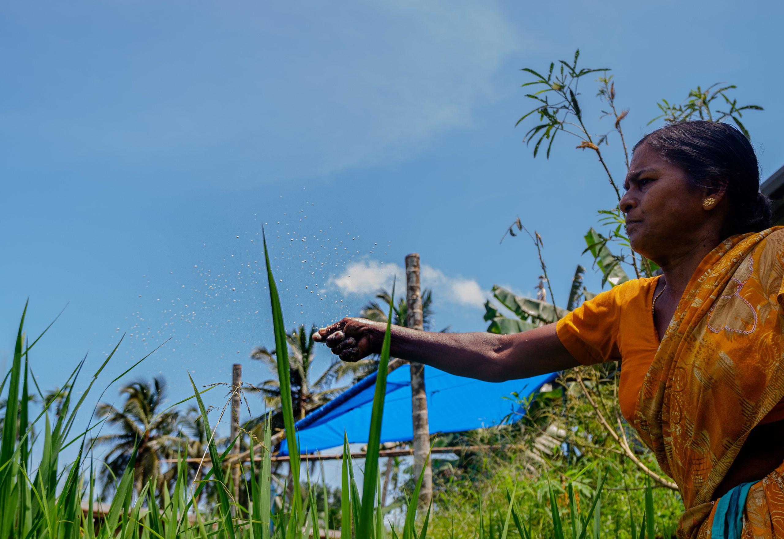 Farming woman feeding crops.