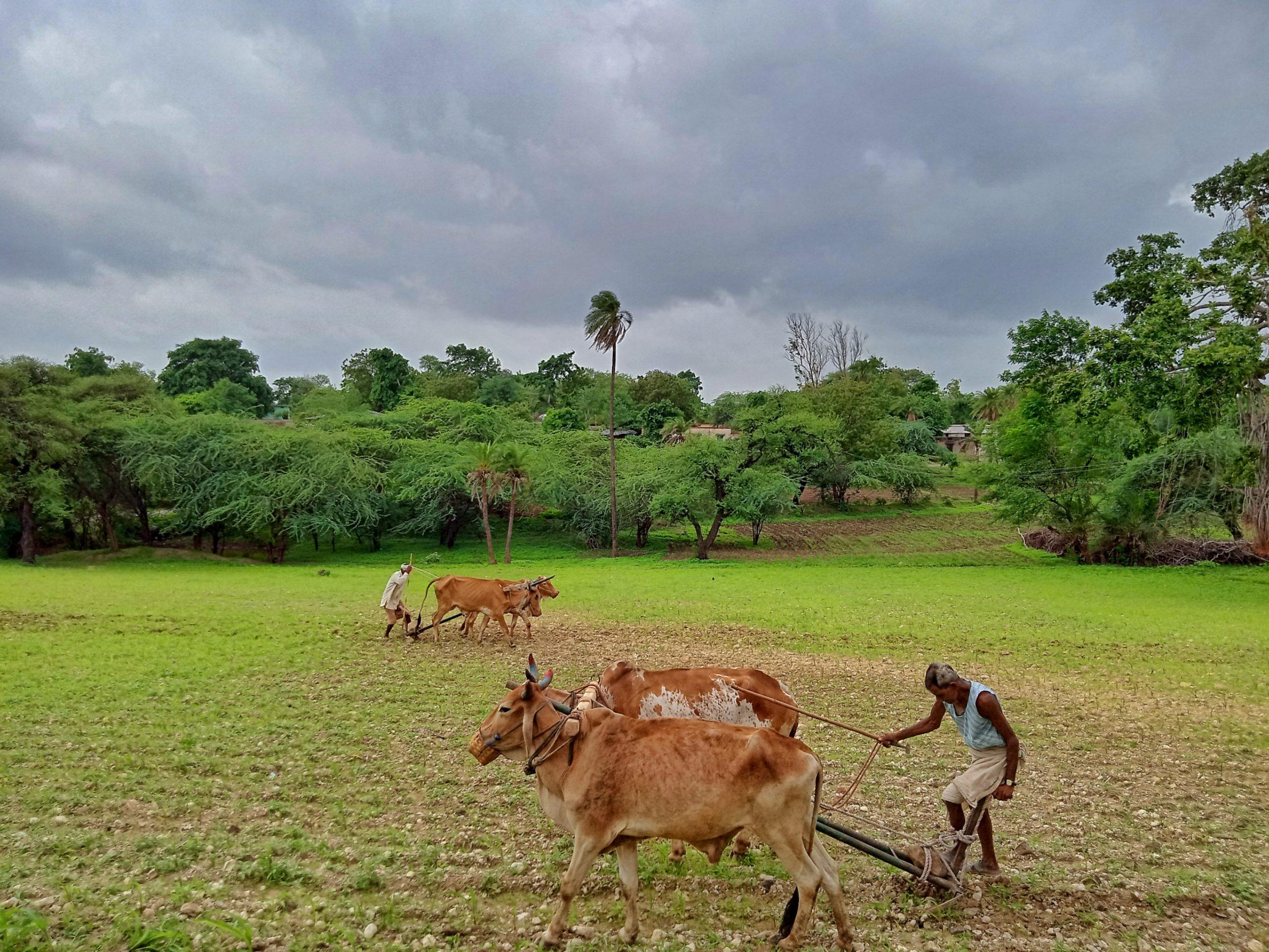 Field in a village